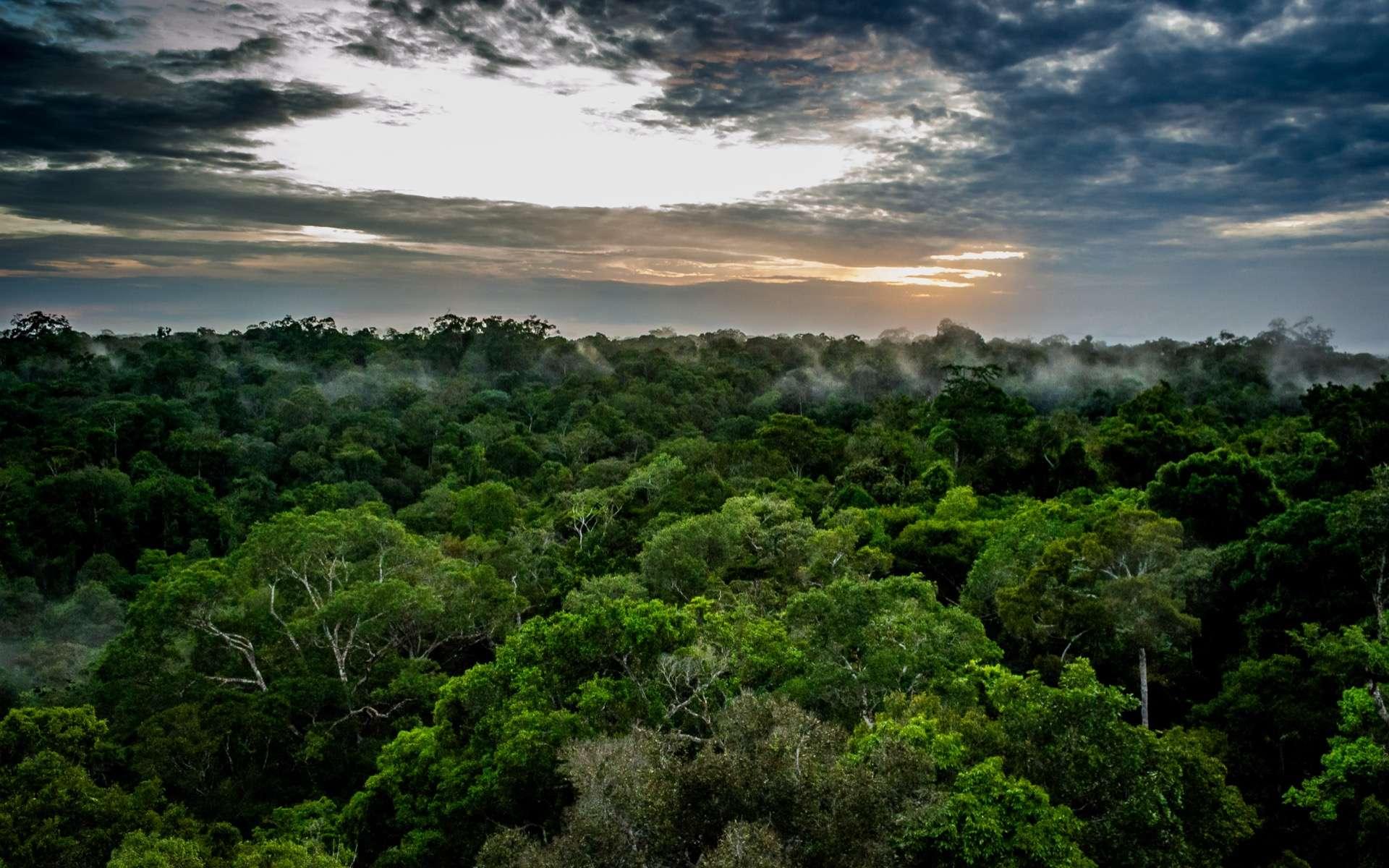 Brésil : la forêt amazonienne émet désormais plus de CO2 qu'elle n'en absorbe depuis 10 ans !