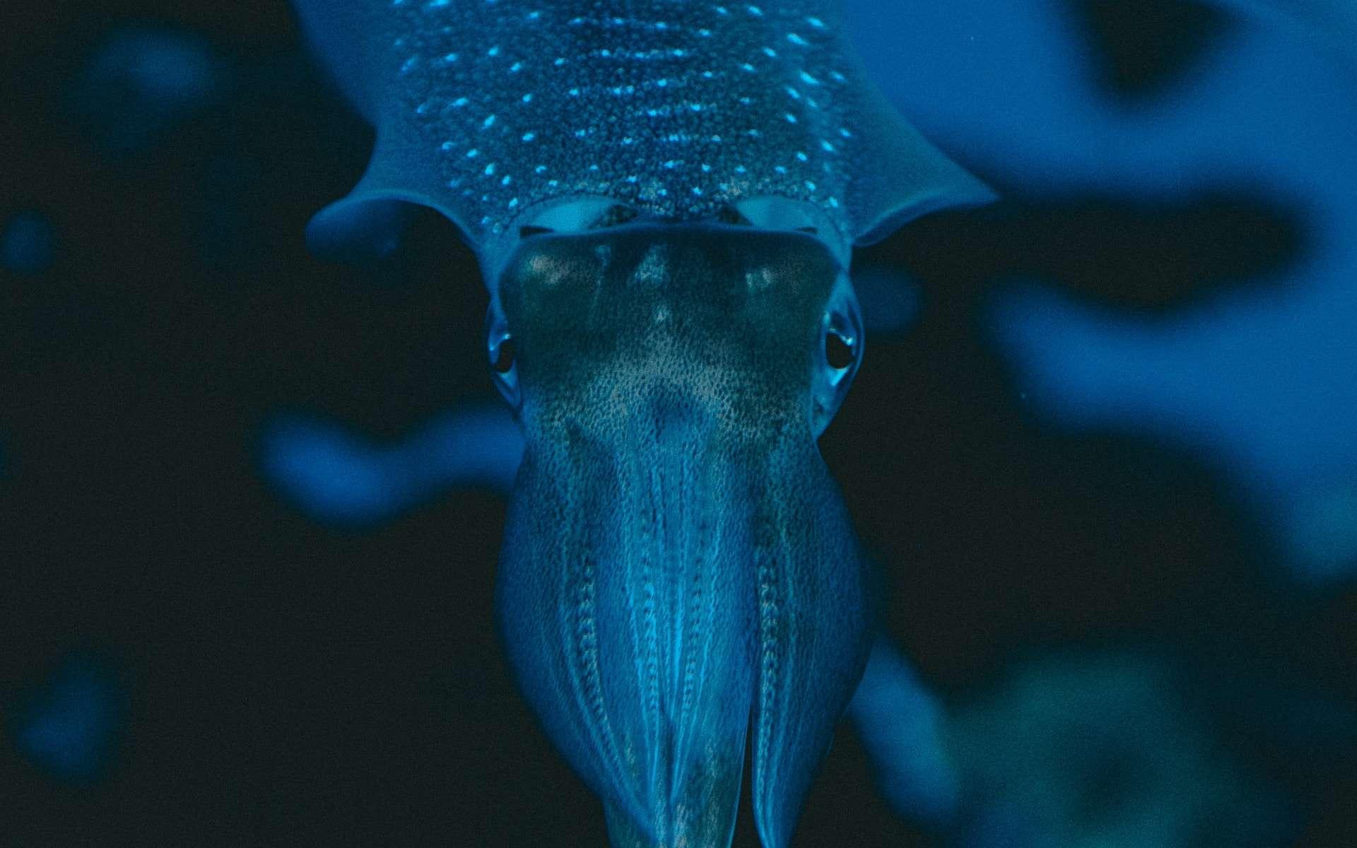 Les yeux des calamars interrogent les scientifiques. © Jonathan Diemel, Unsplash