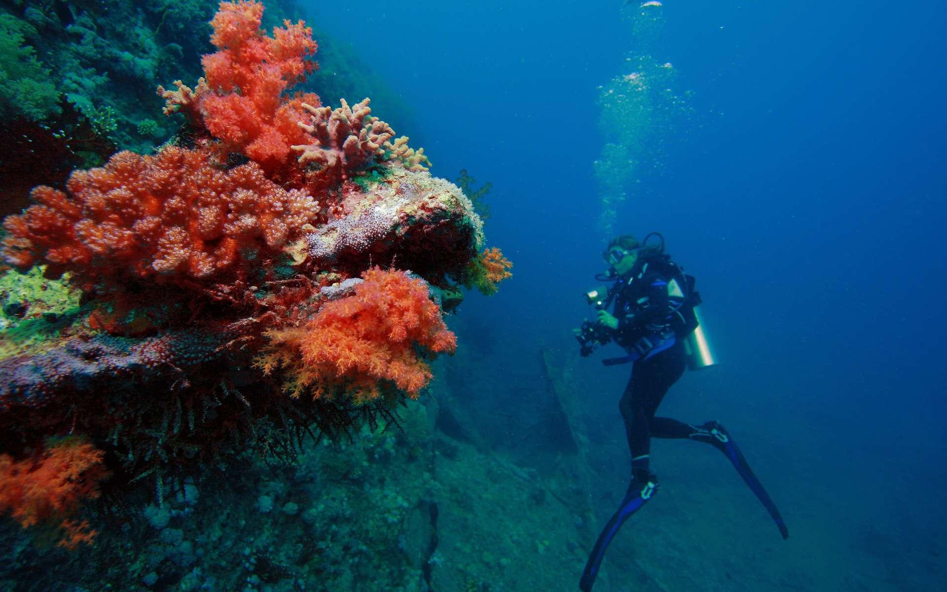 Des précautions indispensables doivent être respectées lors de la plongée sous-marine. Crédits DR.
