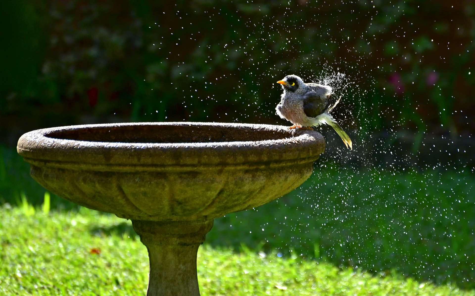 L'été, la faune sauvage peut avoir des difficultés à s'abreuver et à se rafraîchir. © Ernest, Adobe Stock