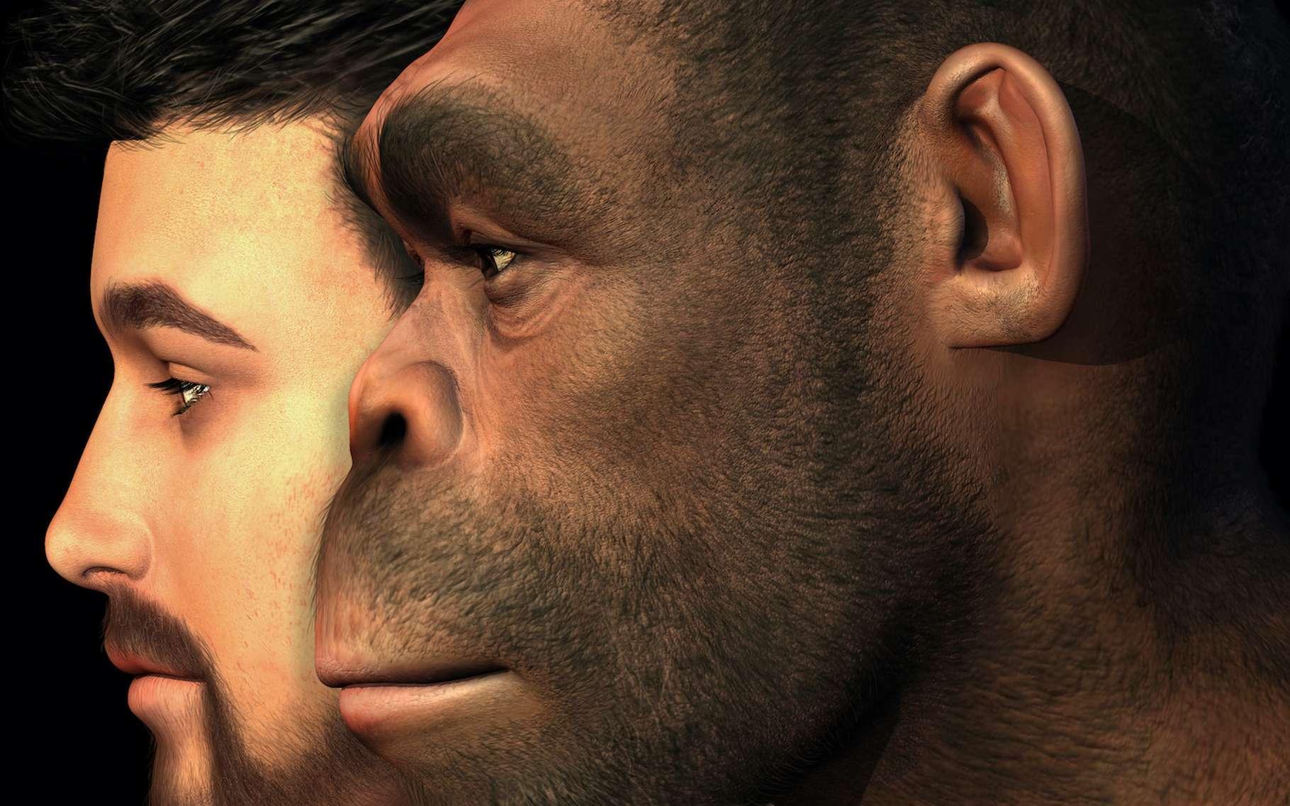 Des chercheurs ont découvert, dans l'ADN de l'Homme moderne, des traces d'un métissage passé avec un mystérieux ancêtre. Peut-être un Homo erectus ? © AlienCat, Adobe Stock