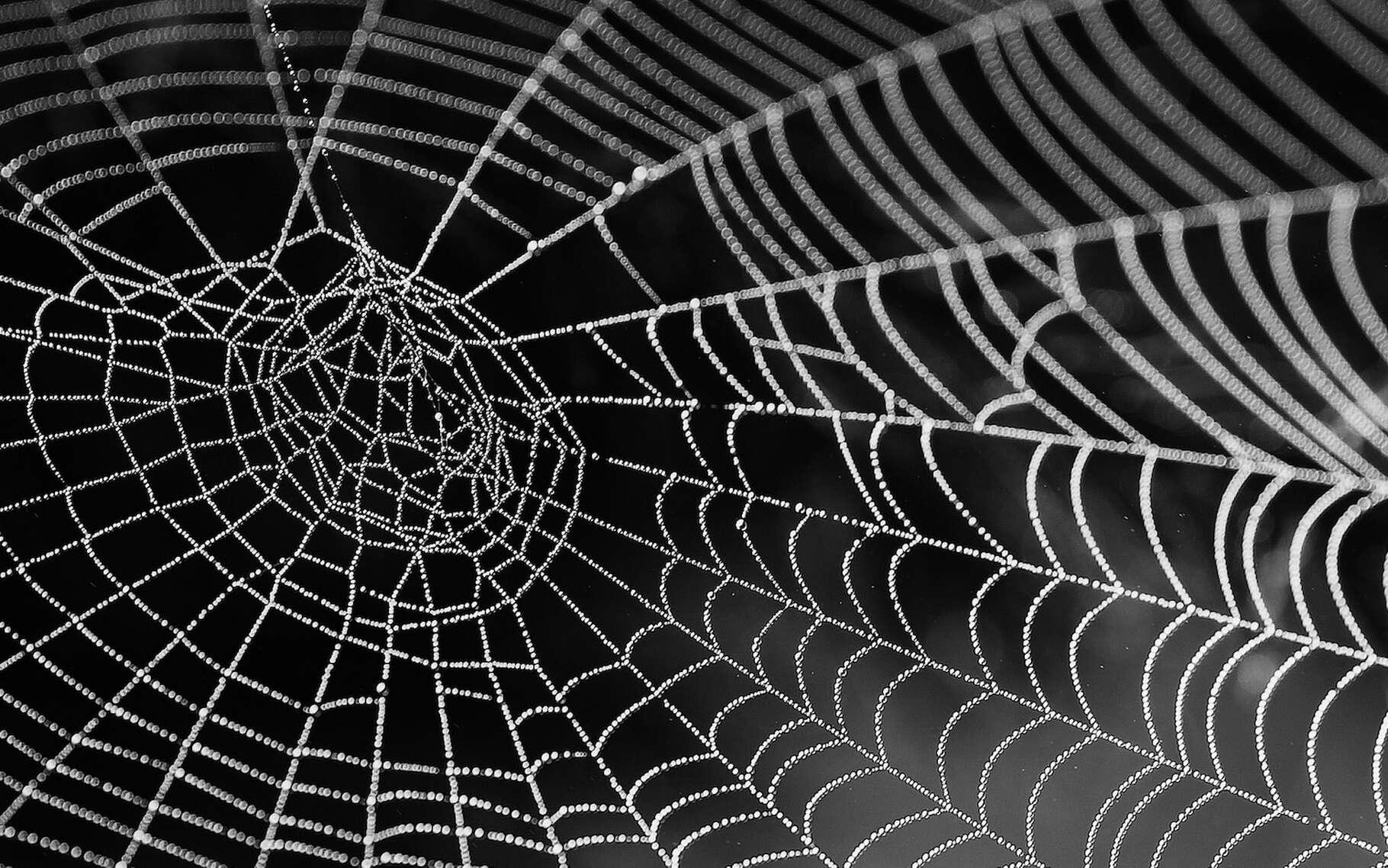 Même si un pas de plus a été fait, la soie d'araignée n'a sans doute pas encore livré tous ses secrets. © bella67, Pixabay, CC0 Creative Commons