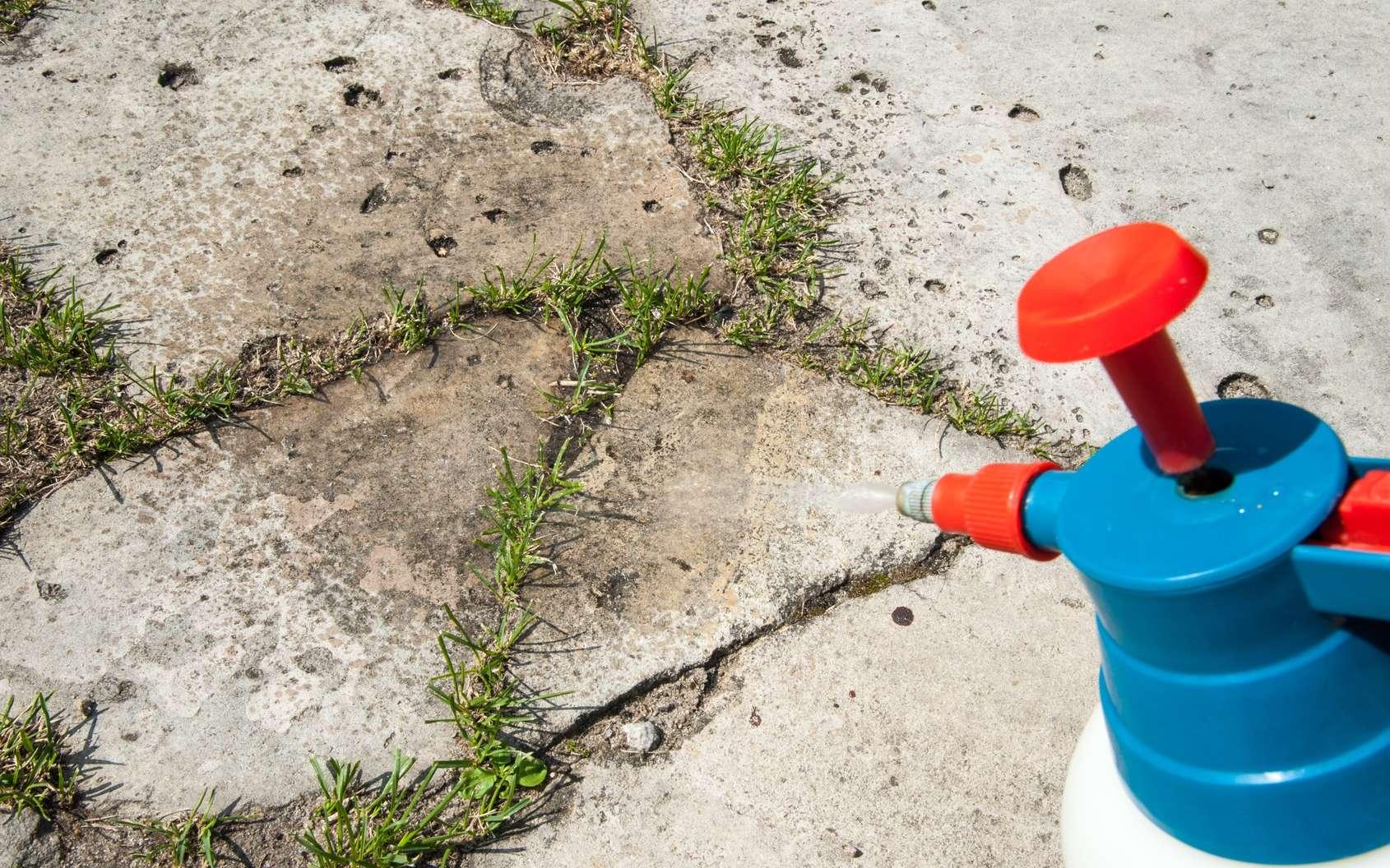 Jardinage : comment désherber sans produits chimiques ?