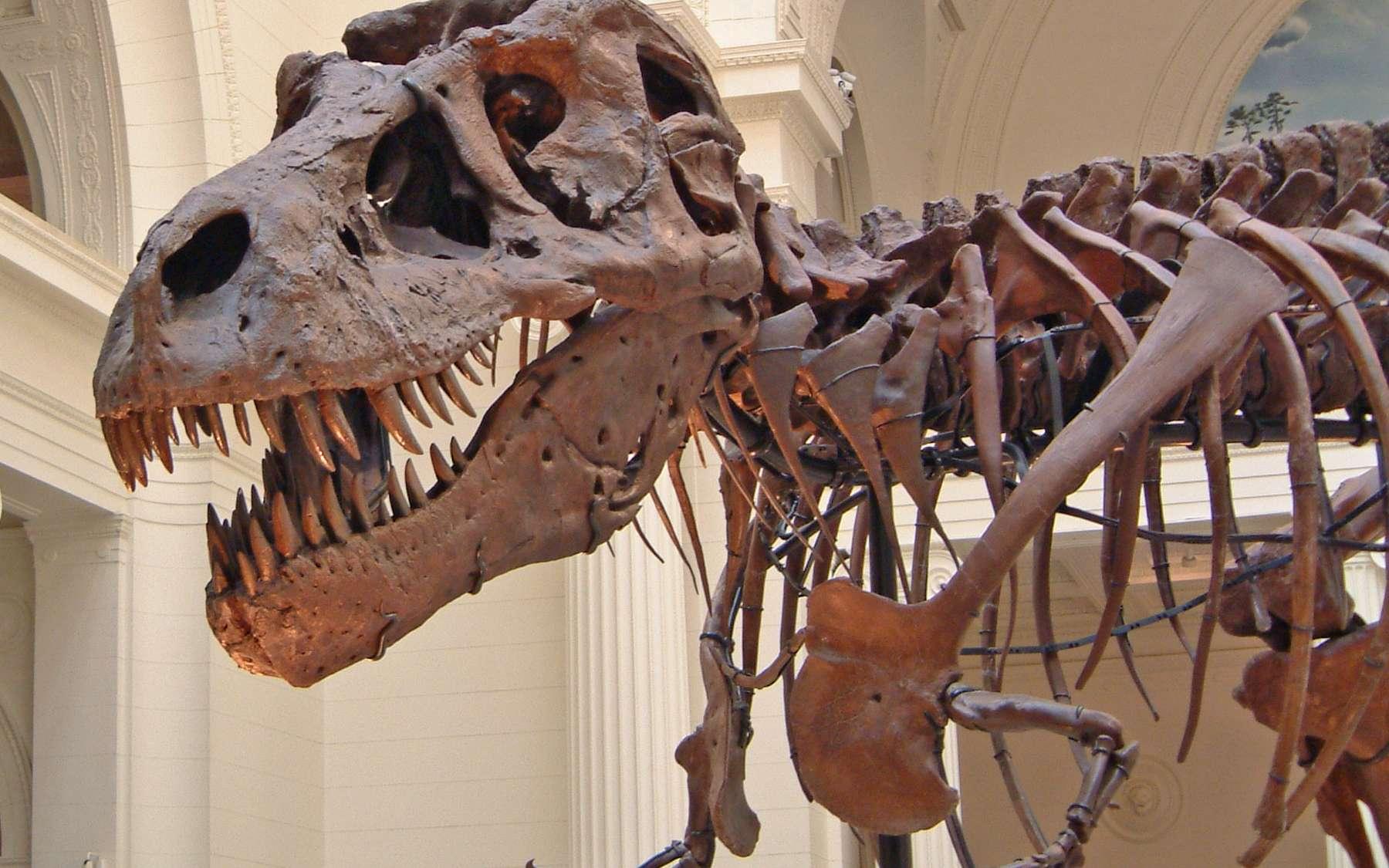 Un squelette de T-Rex visible au Field Museum of Natural History, à Chicago, aux États-Unis. © Terence Faircloth, Flickr, CC by-nc-nd 2.0