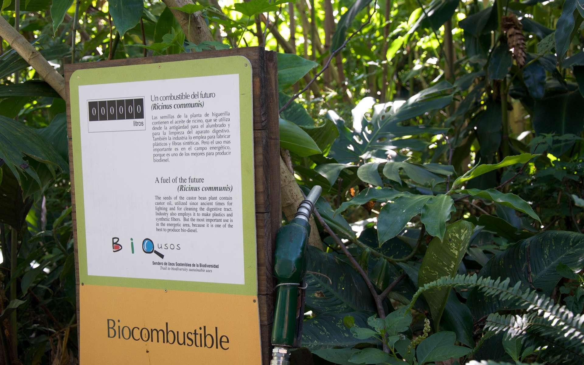Le biocarburant E10 est l'une des solutions pour mieux respecter la nature. © Sam Beebe, cc by 2.0