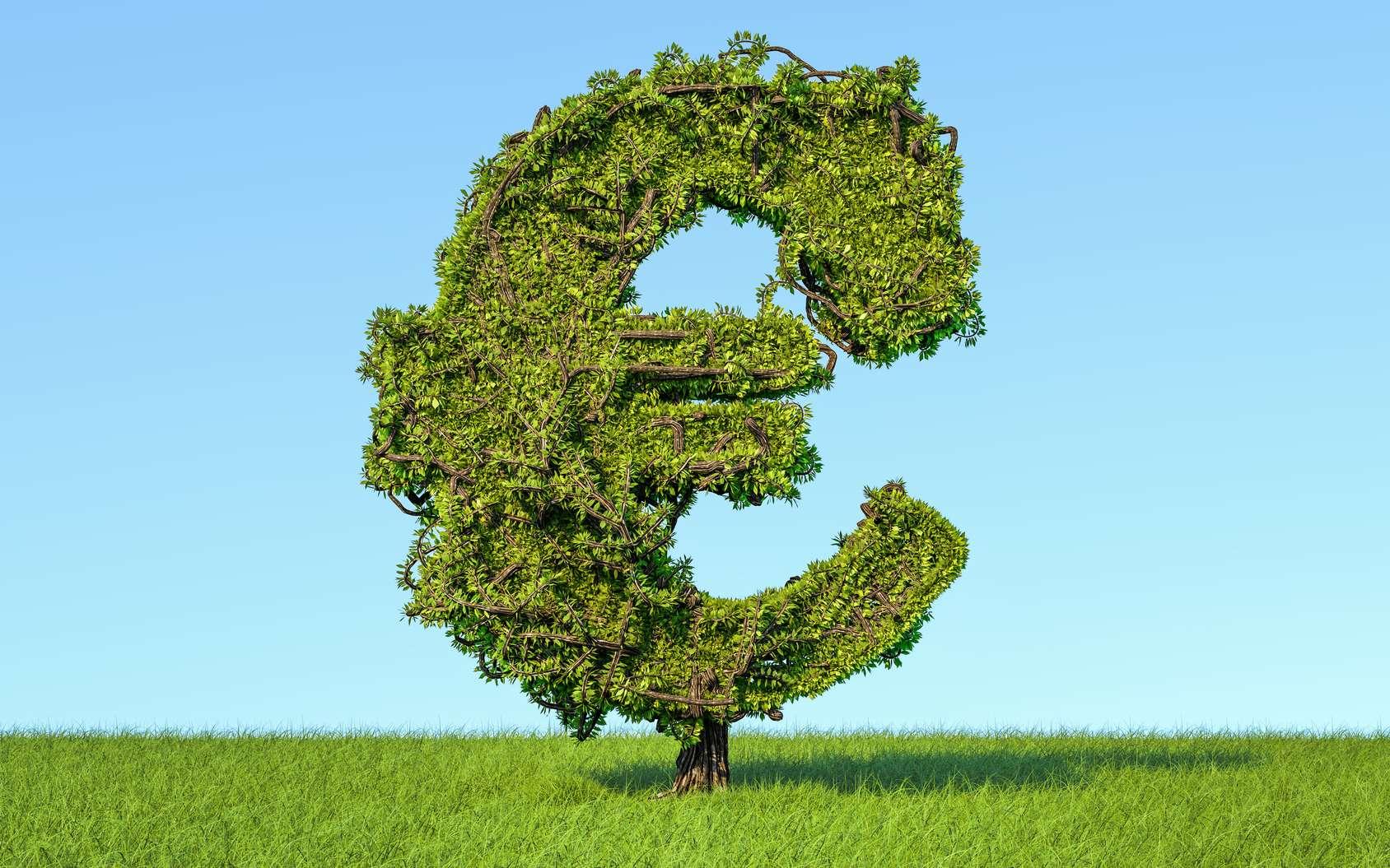 Les arbres ont un prix. Voici les plus chers du monde. © alexlmx, Fotolia