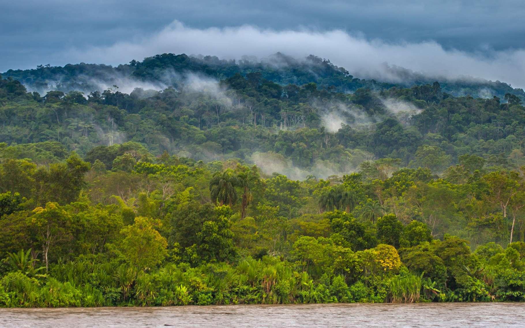 Parmi les sept nouvelles espèces de guêpes découvertes en Amazonie par une équipe de l'université de Turku (Finlande), Clistopyga crassicaudata tire son épingle du jeu. Ou plutôt, son dard. Car celui-ci s'avère extraordinairement long et large. © Grispb, Fotolia
