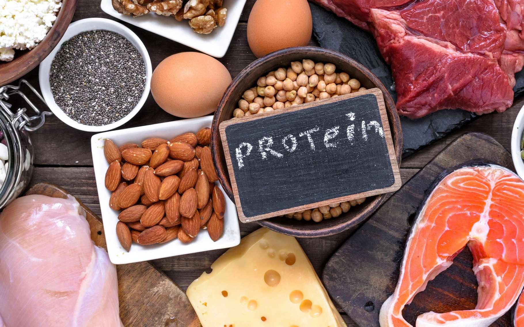 Des expériences menées sur des vers, des mouches et des cellules humaines montrent qu'un régime hyperprotéiné a pour effet de doper la production de protéines par notre organisme et, malheureusement, la production de protéines défectueuses, dangereuses pour notre santé. © samael334, Fotolia
