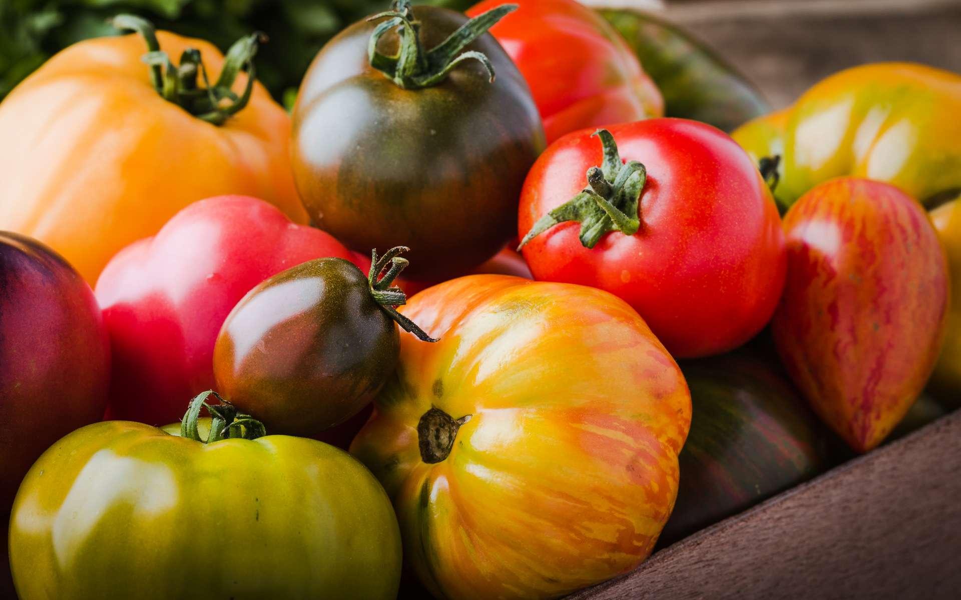 L'Agence de sécurité sanitaire met en garde contre un nouveau virus attaquant les tomates, mais aussi les poivrons et les piments. Une première exploitation dans le Finistère vient d'être déclarée contaminée. © istetiana, Adobe Stock