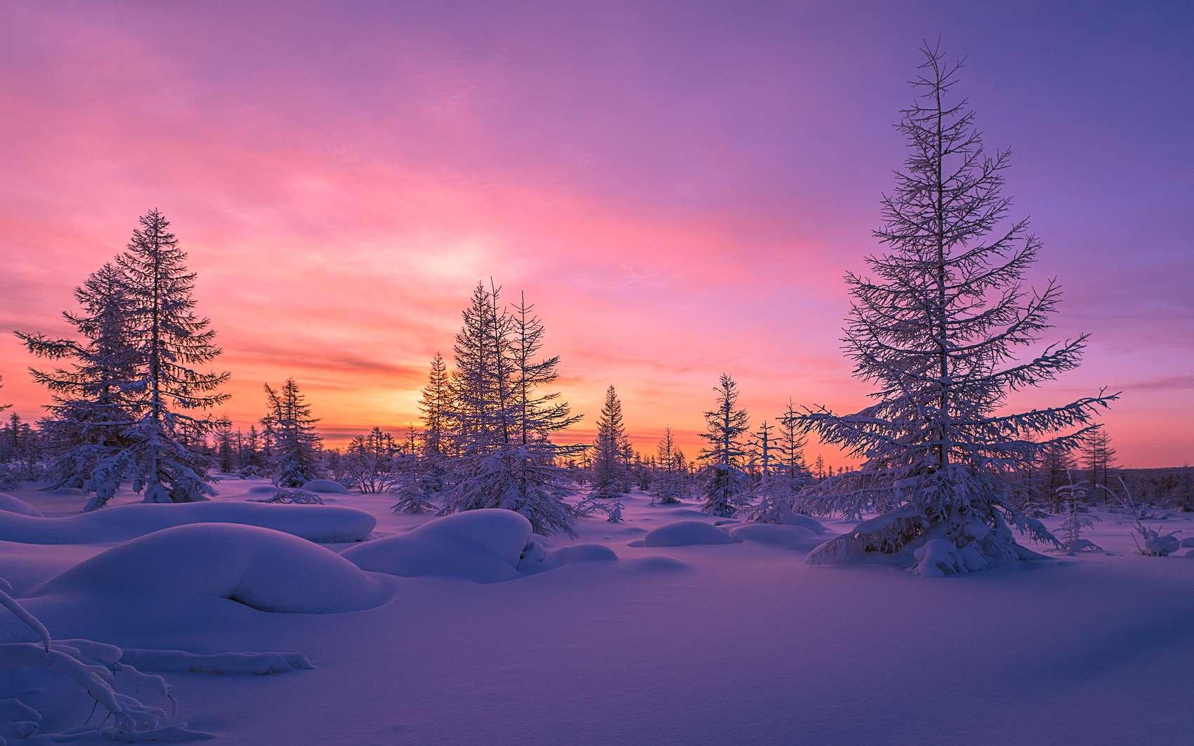 En Alaska, l'hiver, il fait froid. Enfouies dans le sol gelé, les grenouilles des bois devraient logiquement mourir. Mais non, car elles ont inventé l'antigel. © Olonkho, Fotolia