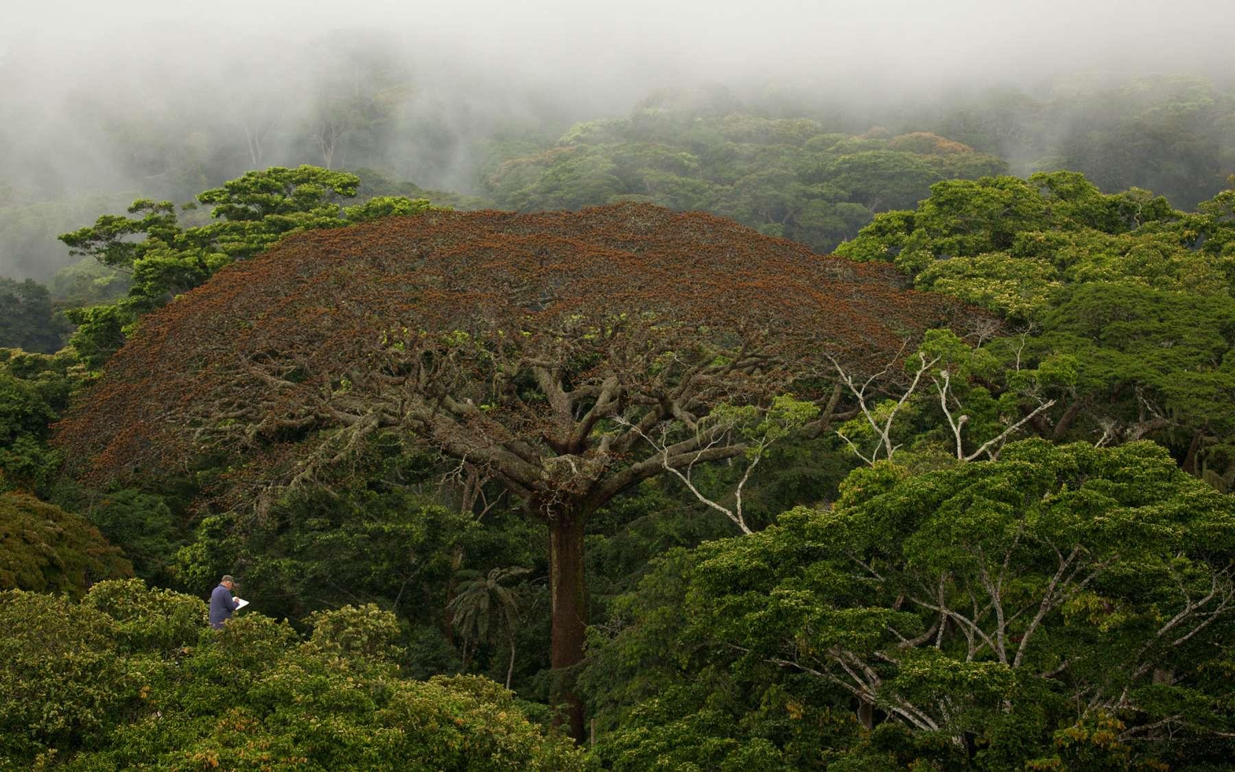 Francis Hallé, perché en haut de la canopée des forêts du Gabon, en plein tournage du documentaire Il était une forêt. © Sarah Del Ben, Wild-Touch, 2013