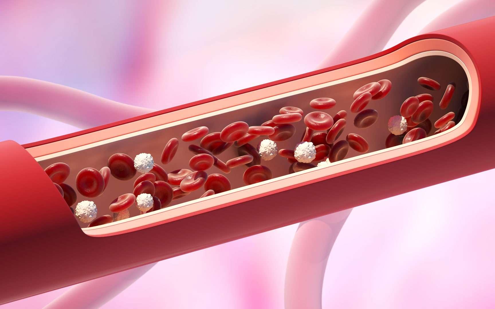 Une image de synthèse montre des globules blancs dans un vaisseau sanguin. ©iLexx, Envato elements