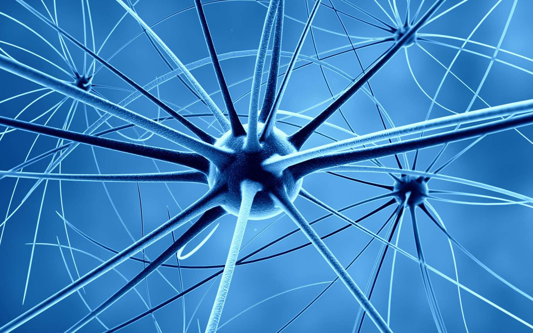 On estime que dans un cerveau humain, il y a environ 100 milliards de neurones. © Fotolia