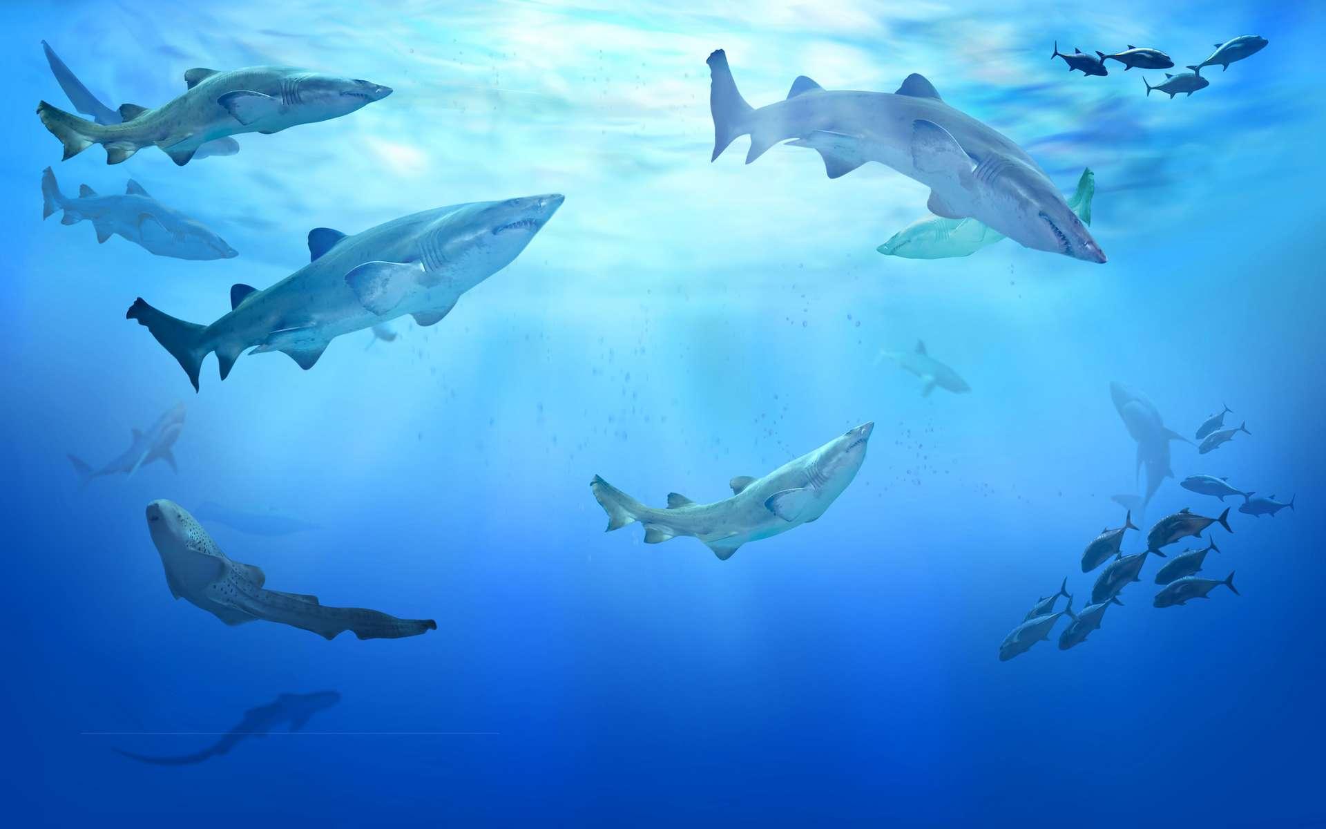 Les requins sont plus présents dans les eaux les moins riches en biodiversité. © silvae, Adobe Stock