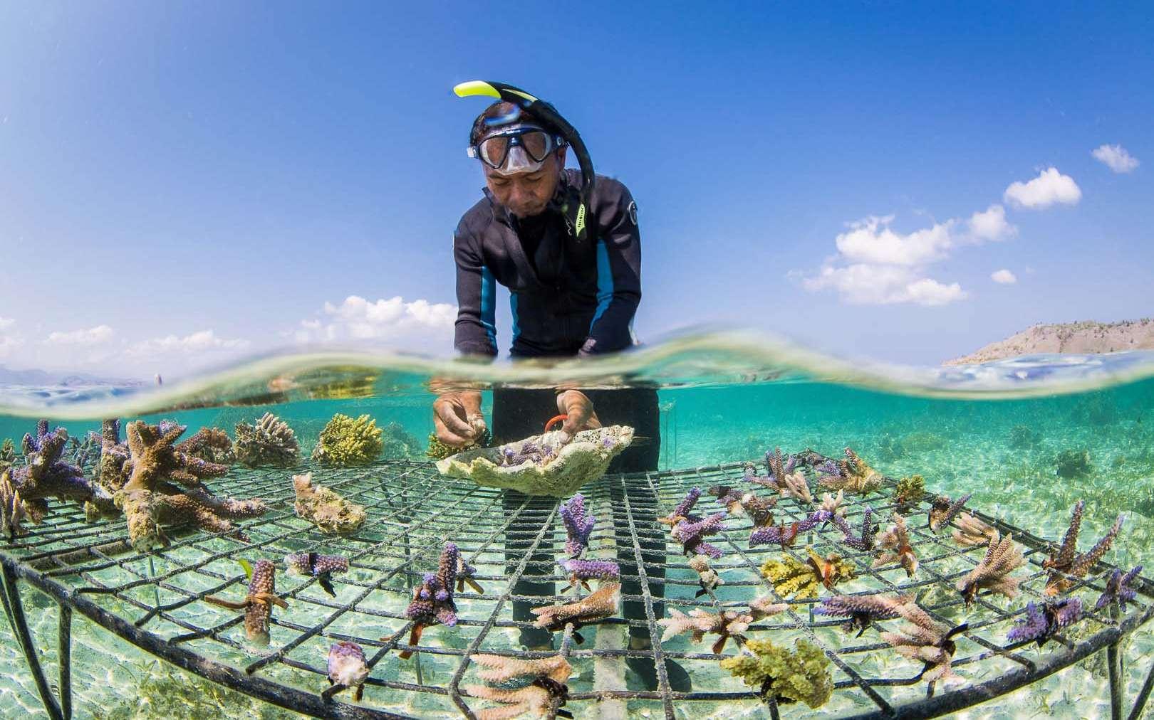 Les coraux forment des écosystèmes très riches, où cohabitent de très nombreuses espèces. Ils sont en régression à l'échelle de la planète depuis plusieurs années. © DR