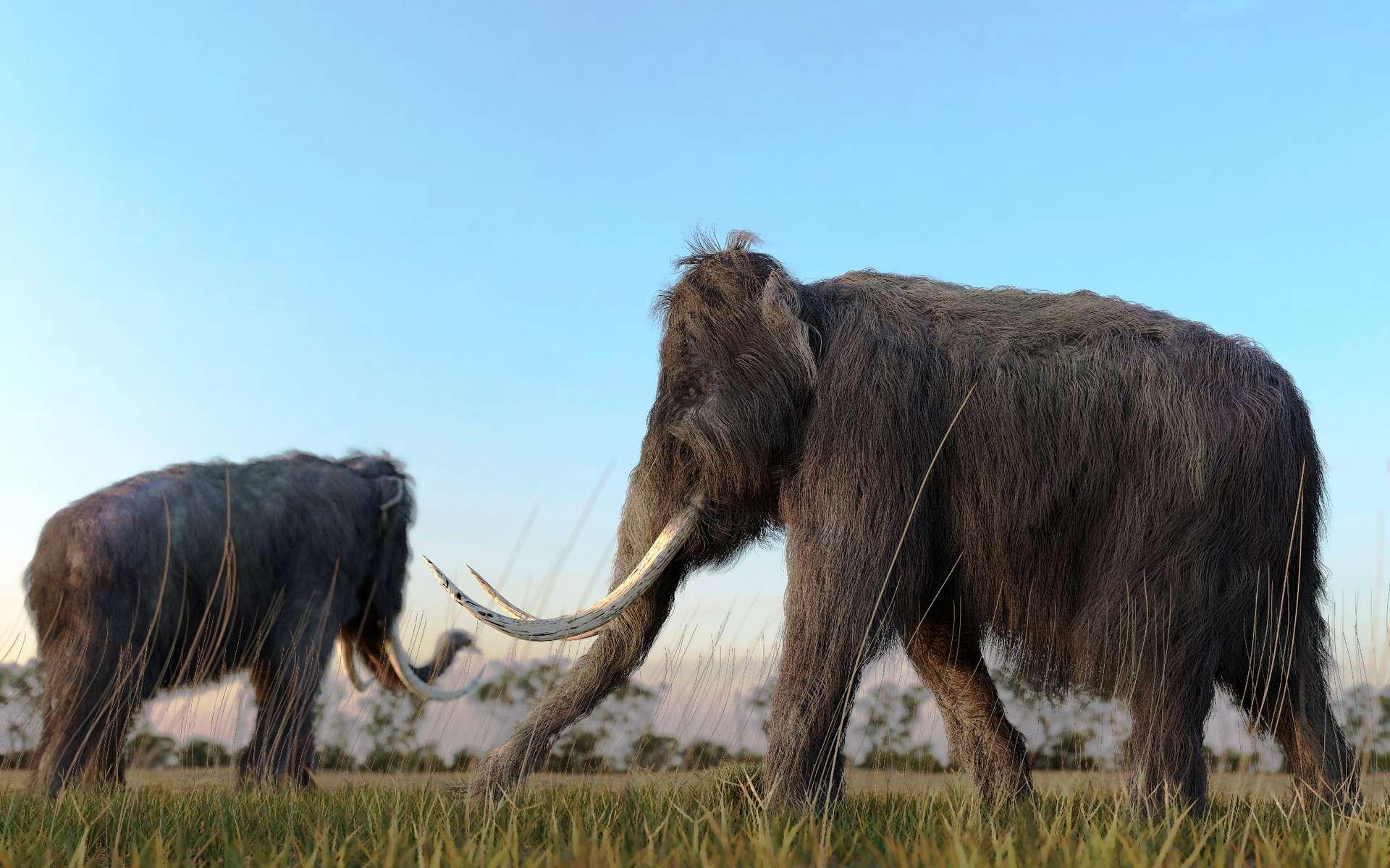 Les mammouths étaient présents sur le continent nord-américain depuis environ deux millions d'années quand ils ont dispararu il y a un peu plus de 10.000 ans pour des raisons encore inconnues. L'une de ces espèces, le Mammouth de Colomb, est apparue il y a un million d'années et semble avoir colonisé des îles californiennes à deux reprises, lorsque les glaciations ont pu lui permettre de nager dans des eaux peu profondes. © Shutterstock, Aunt Spray