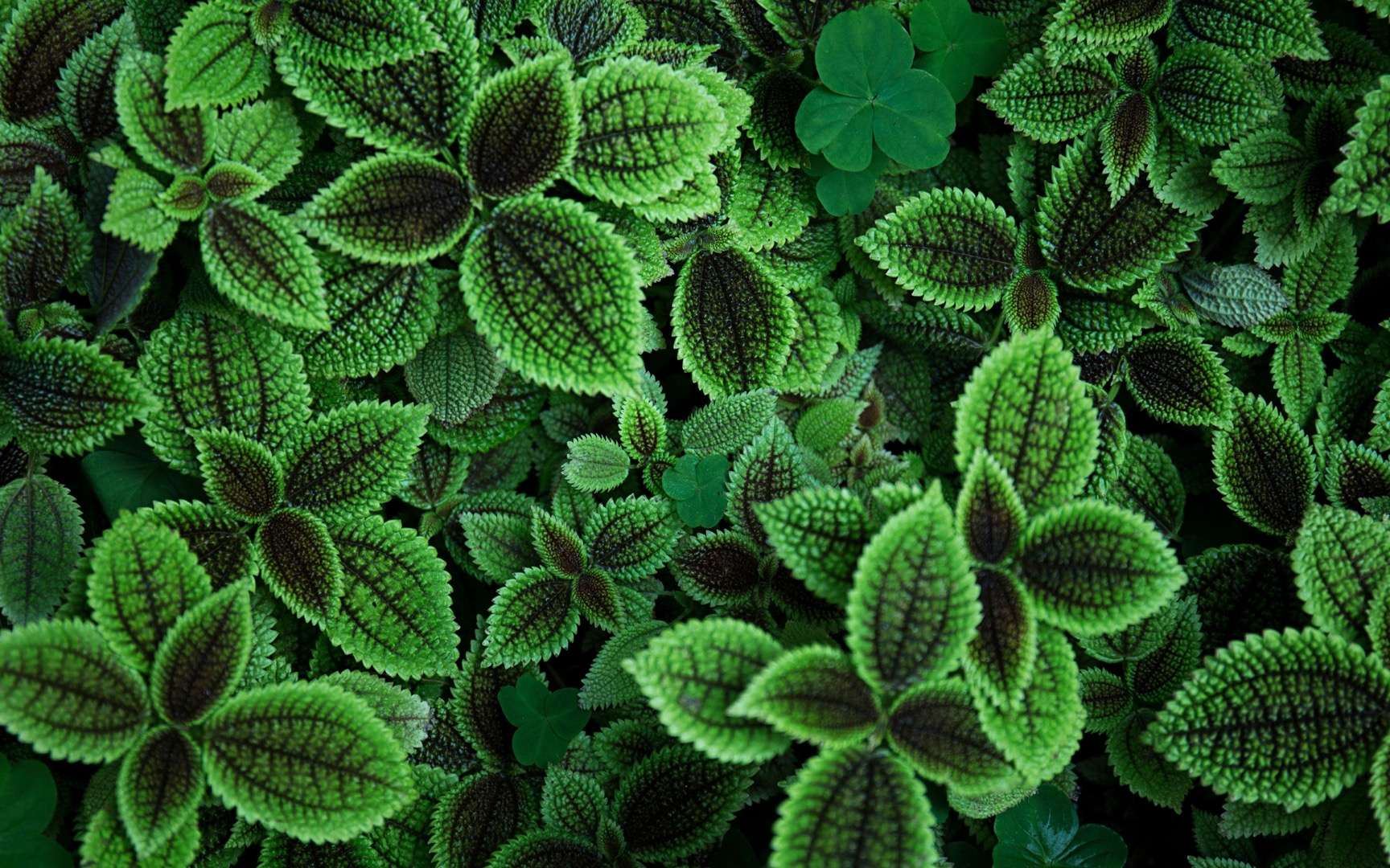 Quels effets la pollution a-t-elle sur les plantes ? © Shehryar, Adobe Stock