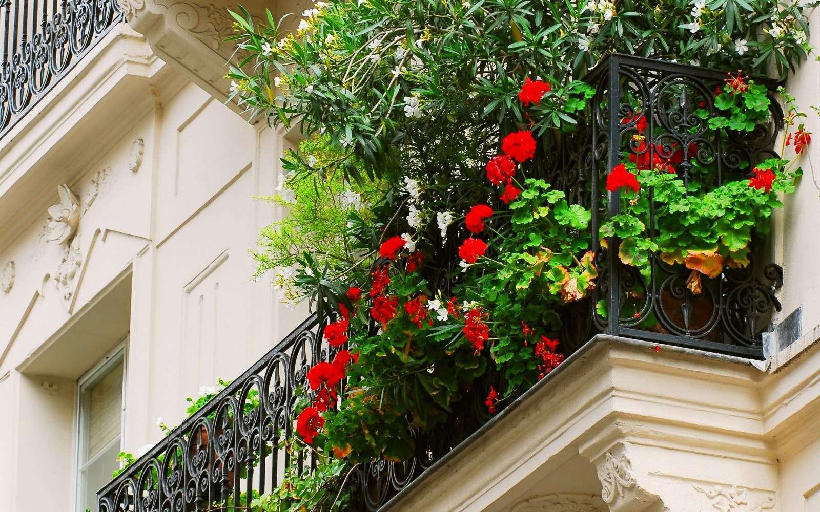 Nos bâtiments haussmaniens aptes à supporter le virage écologique ? © Elena Elisseeva
