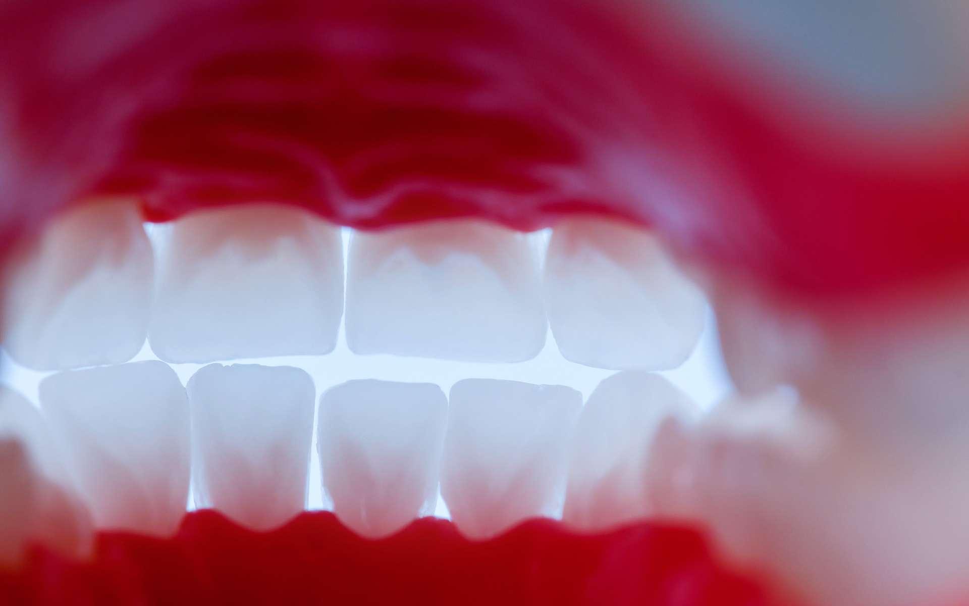 La présence de poils dans la bouche est exceptionnelle. © shock, Adobe Stock