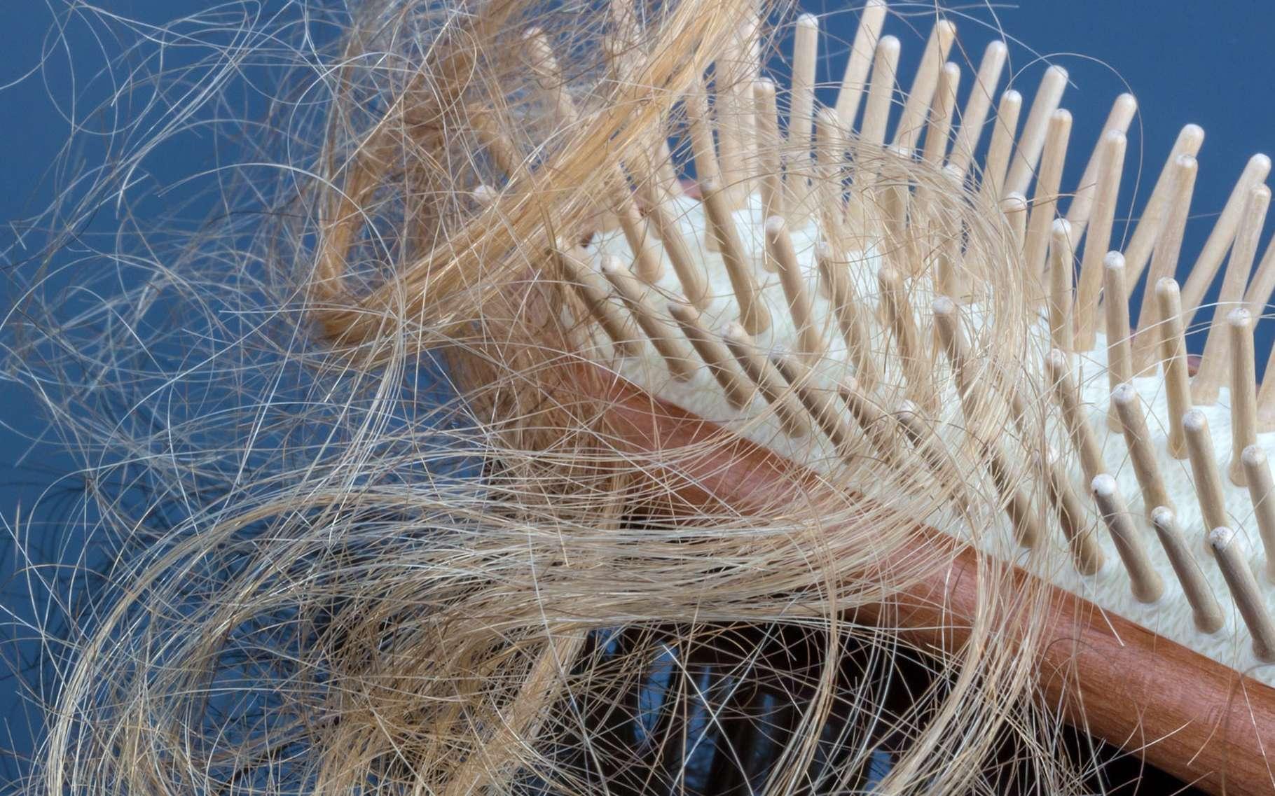 À quoi est due la chute de cheveux saisonnière ? © Gina Sanders - Fotolia