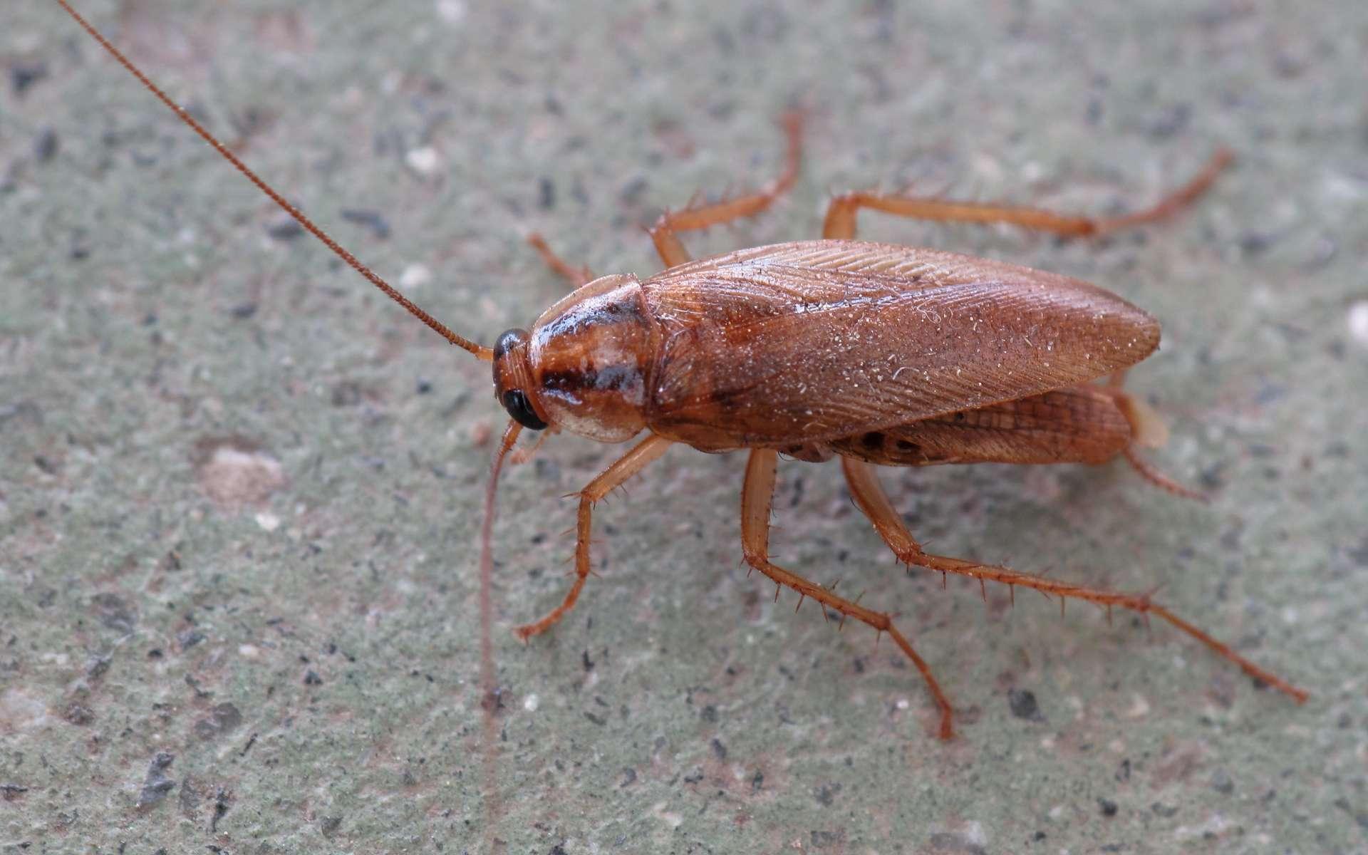 Les insecticides chimiques, une stratégie dépassée dans la lutte contre les insectes. © Lmbuga, Wikipedia
