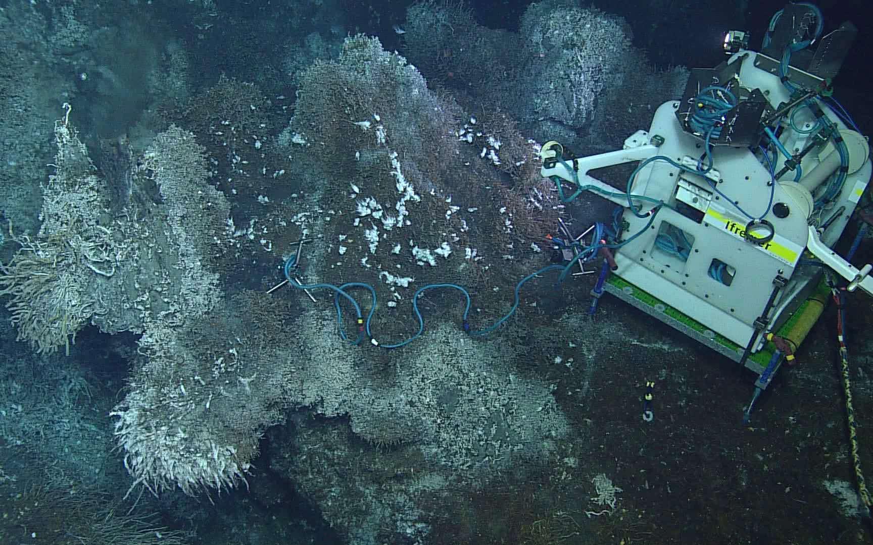 L'édifice hydrothermal Grotto, là où le module d'observation Tempo-Mini a été installé (ici à l'image), se trouve précisement à 2.186 m de profondeur. © Neptune-Canada