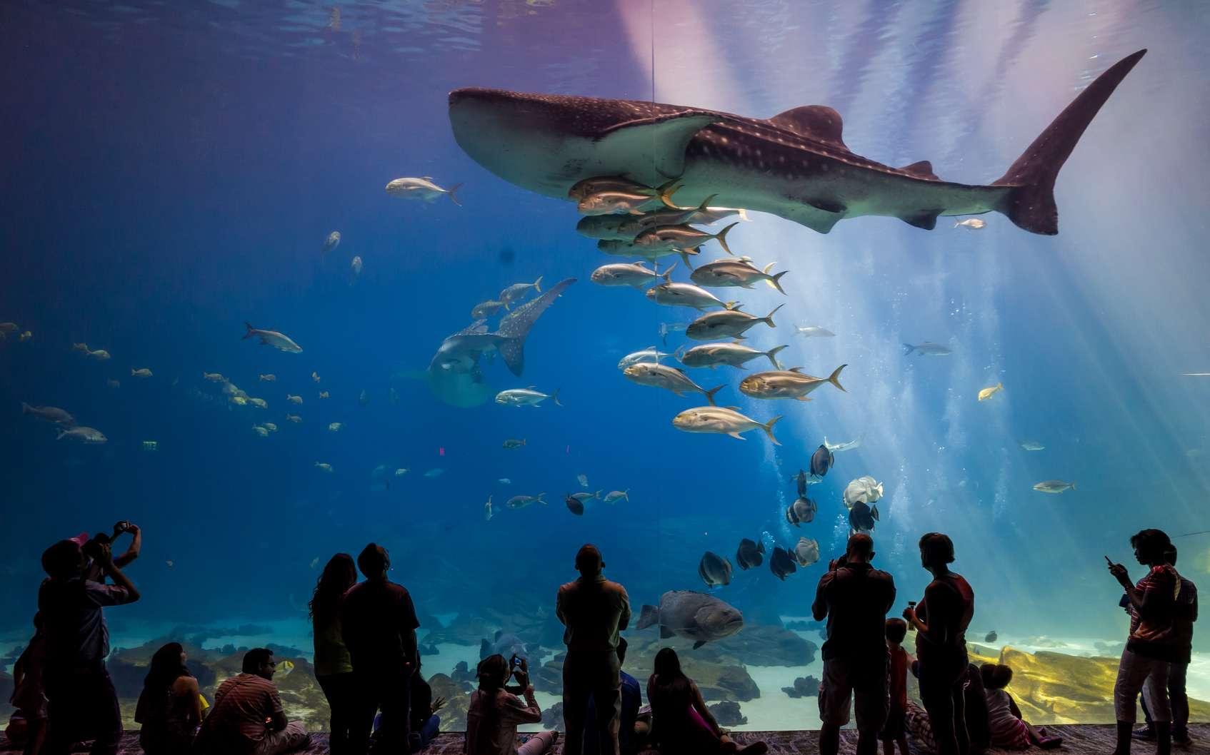 Les aquariums de France permettent de mieux appréhender la vie sous-marine et la faune aquatique. © F11, Fotolia