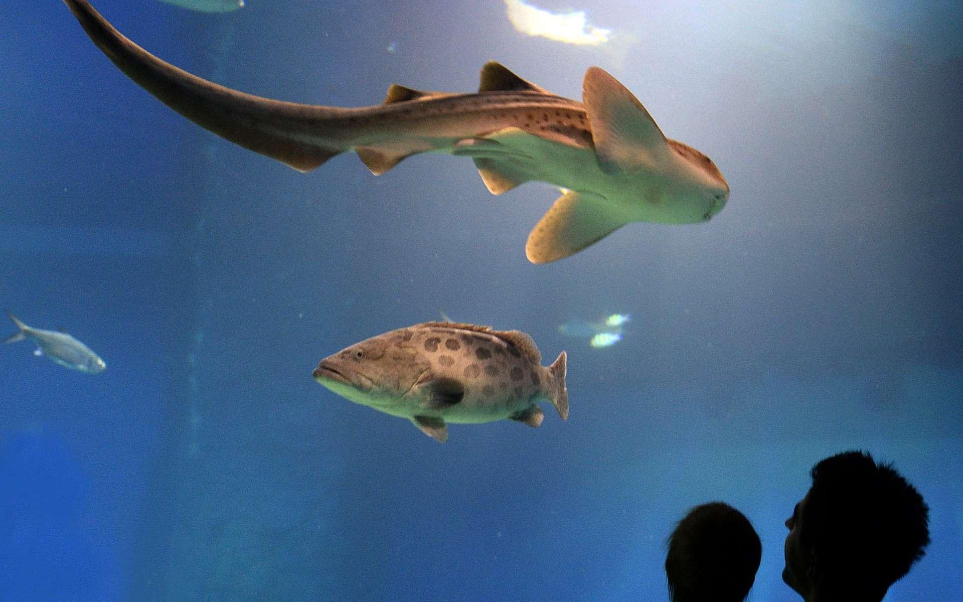 L'océan sera-t-il un jour un habitat supplémentaire pour des humains en surnombre ? Au Japon, l'idée est prise au sérieux. © AFP Photo, Janek Skarzynski