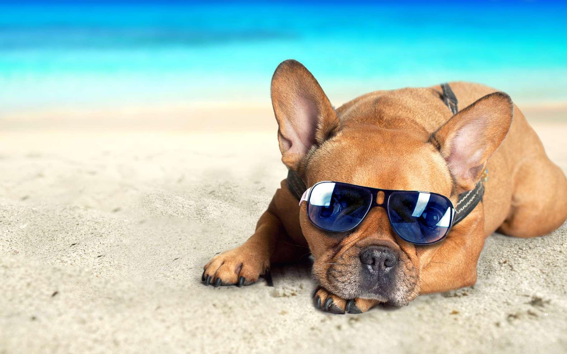Si vous ne voulez pas que votre chien subisse un coup de chaleur, évitez de l'emmener à la plage, sauf peut-être si vous avez un parasol et s'il peut se rafraîchir dans l'eau. © Jenny Sturm, Fotolia