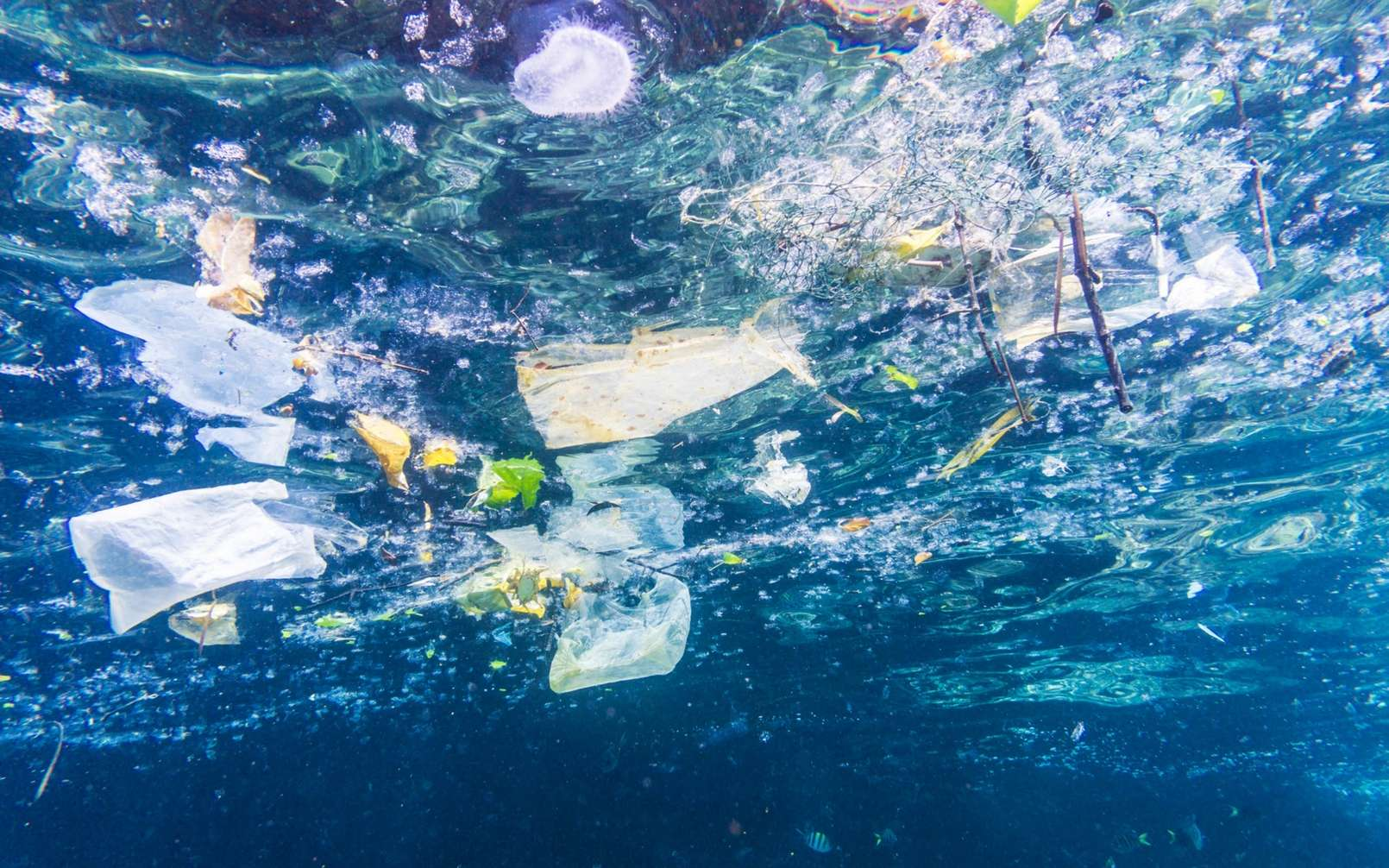 L'ingestion de microplastiques par l'organisme humain atteint des proportions inquiétantes. © Placebo365, IStock.com