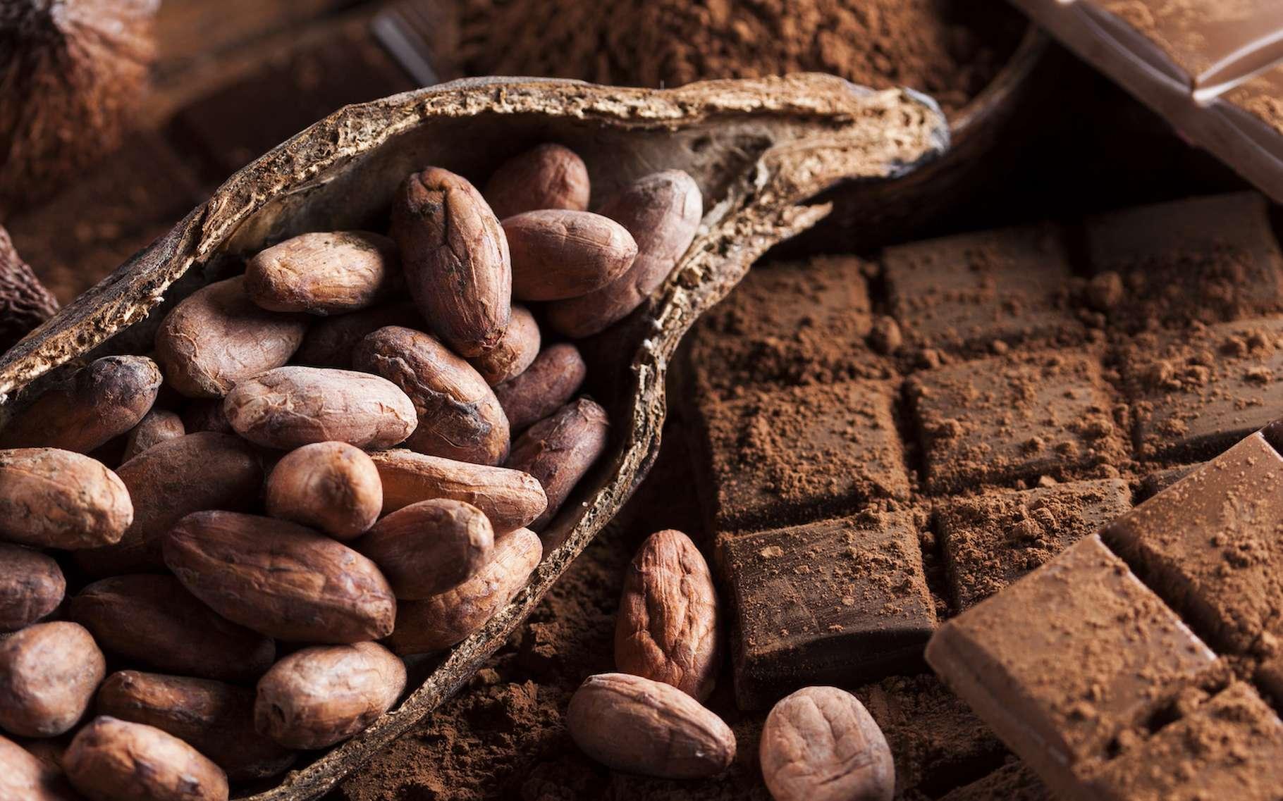 Comme pour le vin, la qualité d'un cacao dépend de nombreux paramètres. © Sébastian Duda, Adobe Stock
