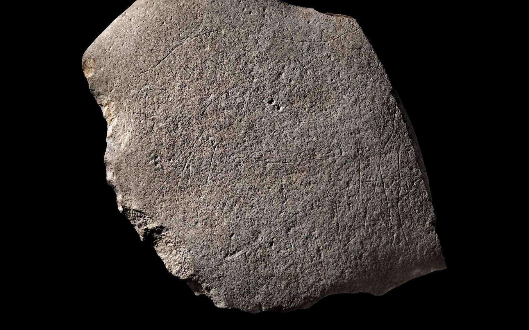 Des archéologues ont découvert à Angoulême, un bloc de grès gravé d'animaux et datant de 12.000 ans avant notre ère. © Denis Gliksman, Institut national de recherches archéologiques préventives