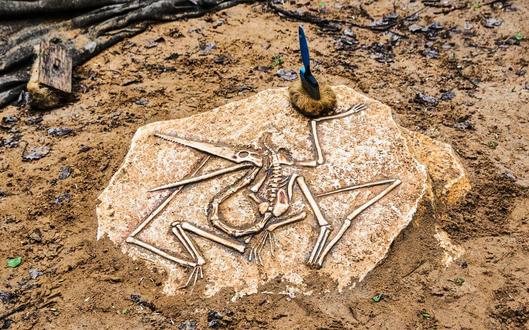 Les fossiles ont beaucoup à nous dire. Encore faut-il savoir les faire parler. © Maksim Shchur, Fotolia