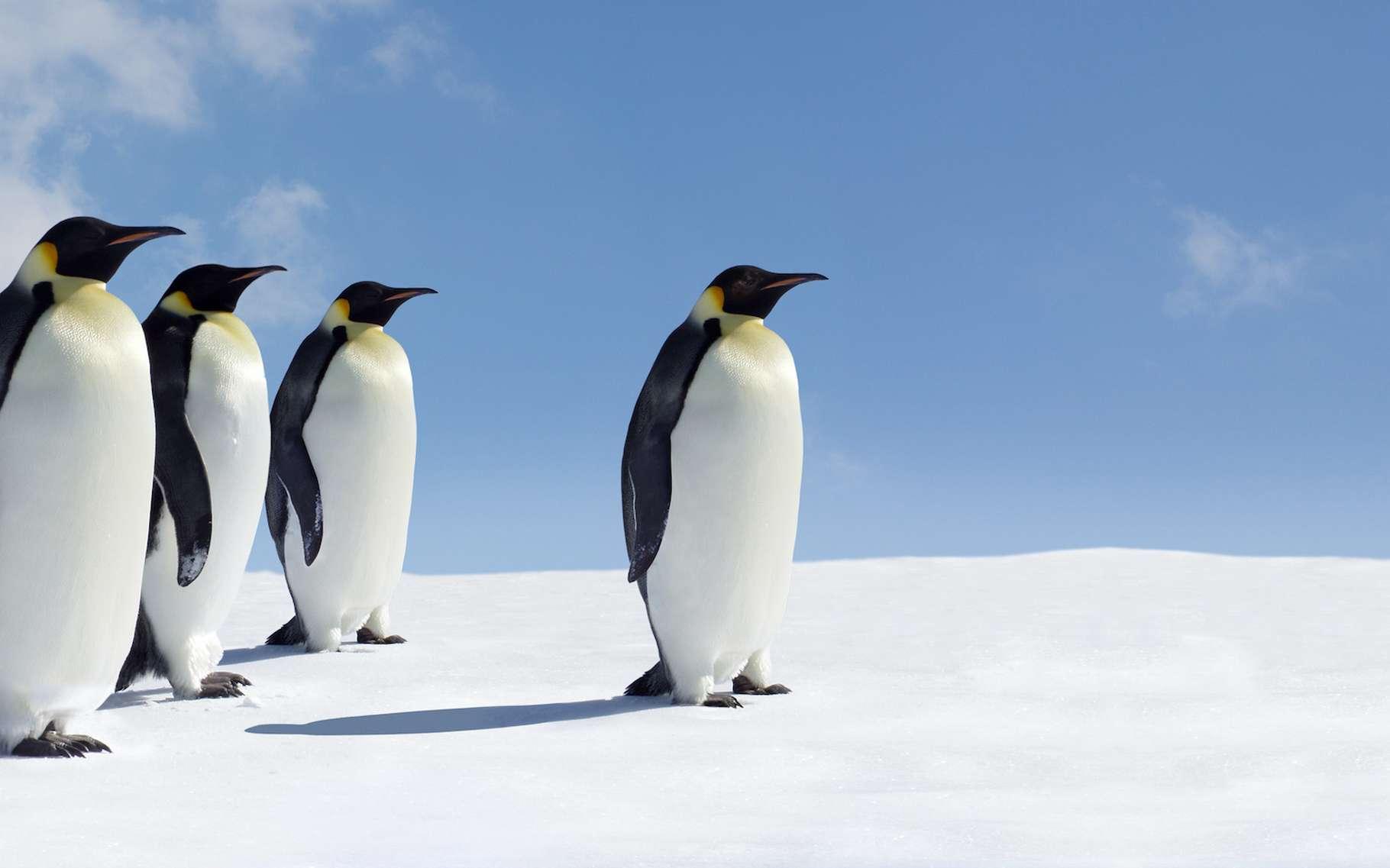Du 14 au 24 juin 2021, la 43e réunion consultative du traité de l'Antarctique (RCTA) se tient à Paris. L'occasion pour des spécialistes de la question, issus de diverses disciplines scientifiques, d'exprimer leur inquiétude quant à l'avenir de la région. © Jan Will, Adobe Stock