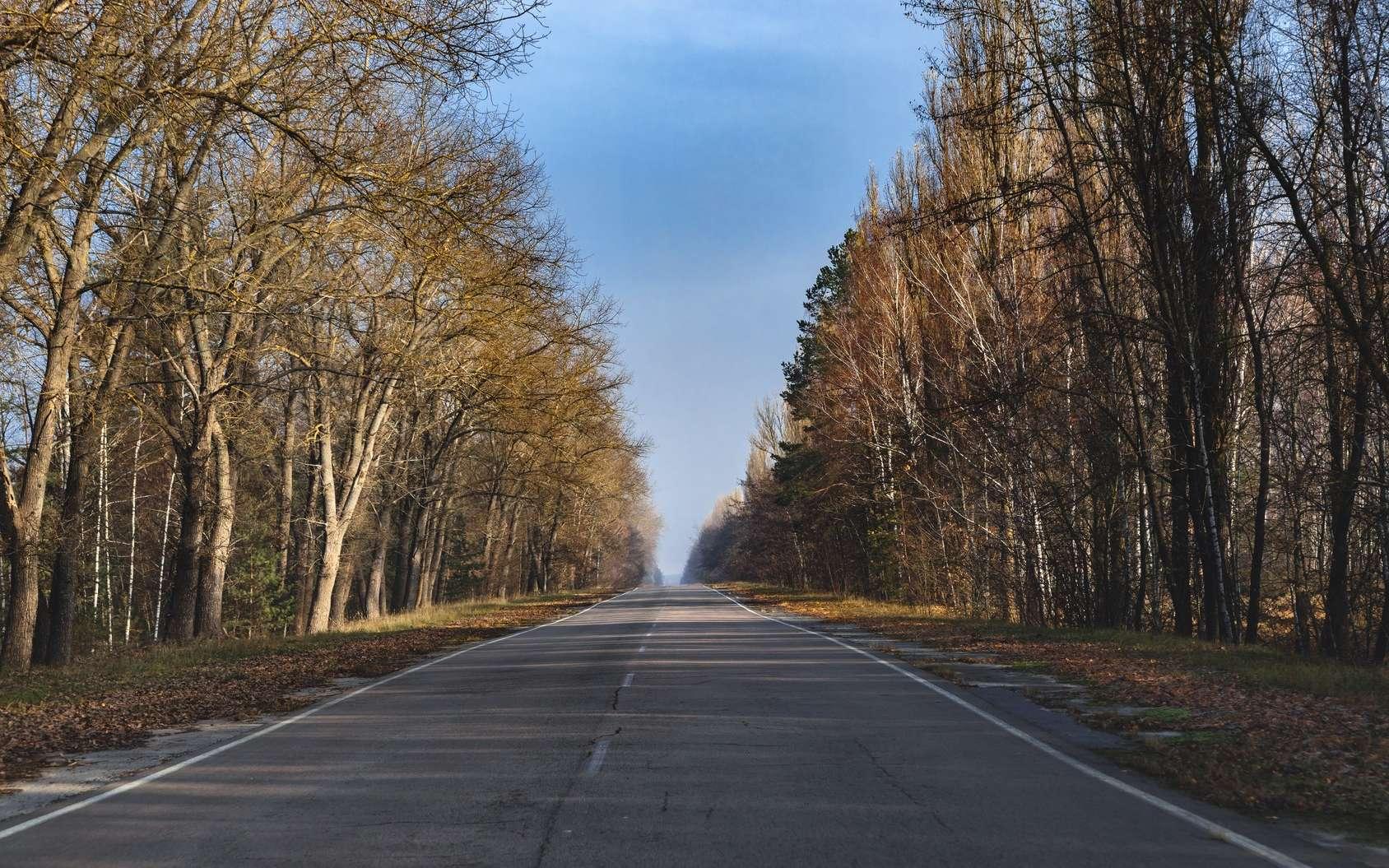 Dans la zone d'exclusion de Tchernobyl, les scientifiques étudient la biodiversité présente. © Sved Oliver, Fotolia