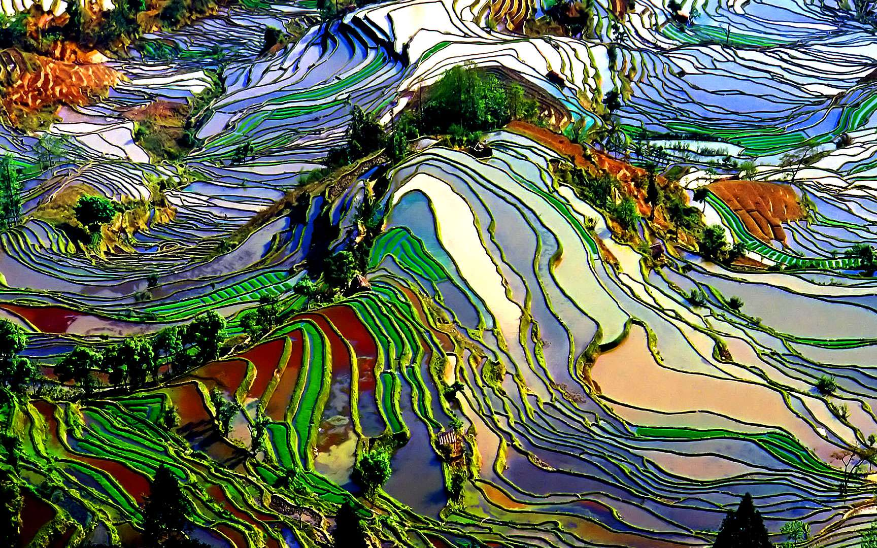 Le développement de l'agriculture et des rizières sur Terre. Rizières en cultures étagées pour profiter au maximum du terrain en dépit d'un relief important : non seulement l'Homme cultive mais il aménage aussi son espace. © Pengyou91, i-stock