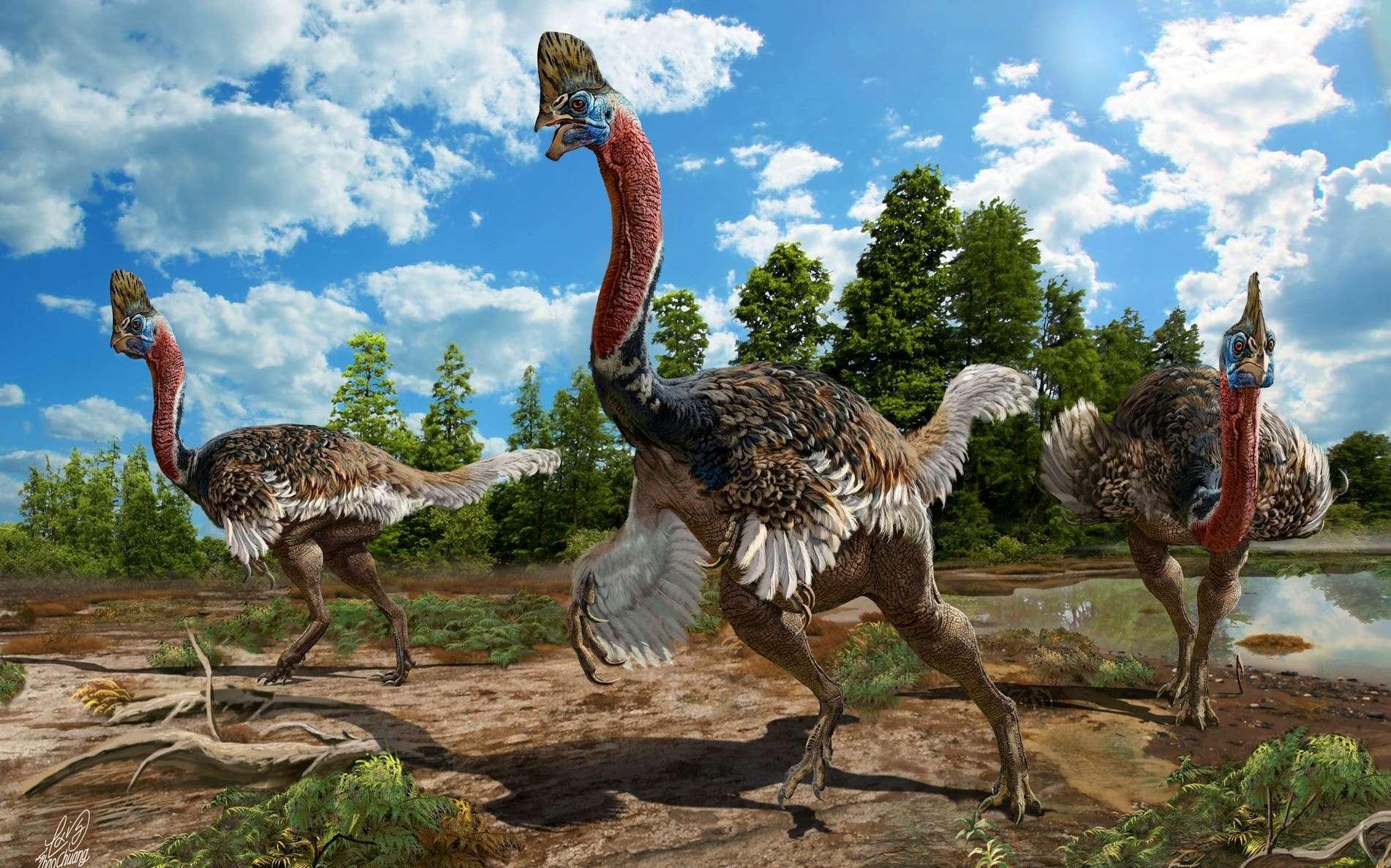 Corythoraptor jacobsi est un étrange dinosaure autruche découvert en Chine. Ici, une vue d'artiste de Corythoraptor jacobsi, visiblement inspirée par les casoars, des oiseaux modernes. © Zhao Chuang