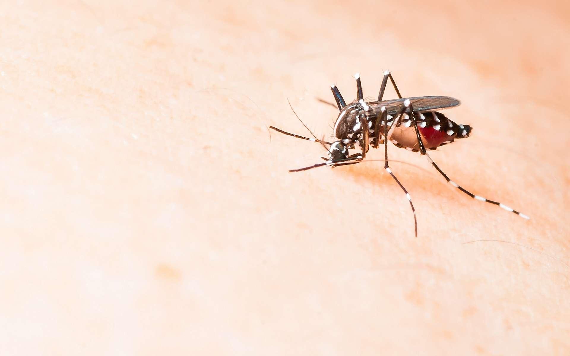 Le virus Zika est transmis par la piqûre de moustiques du genre Aedes. Actuellement, aucun vaccin n'est disponible. © Fendizz, Shutterstock