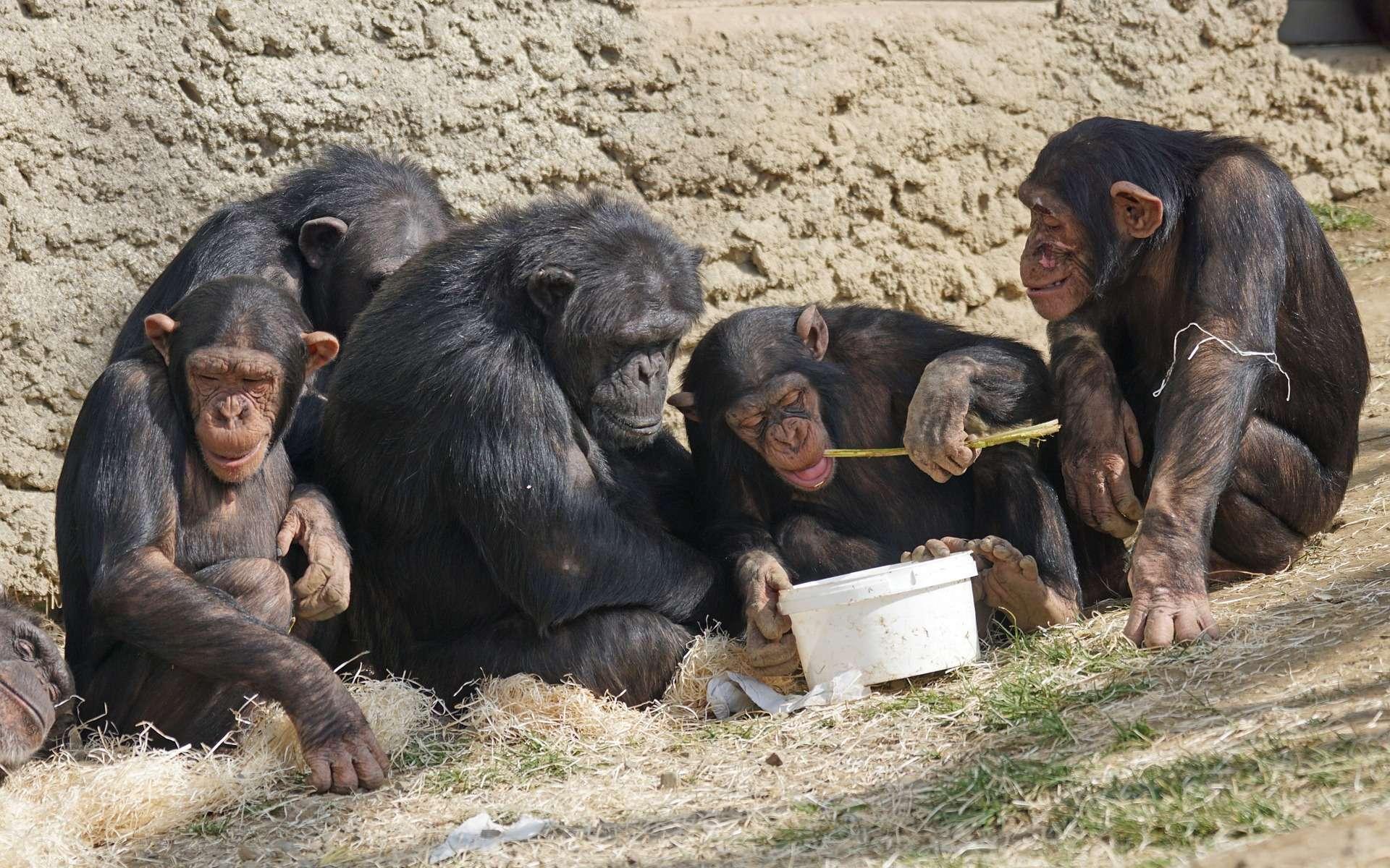 À 26 ans, Jane Goodall est partie vivre dans la forêt avec les singes. © Pixel-Mixer, Pixabay, DP