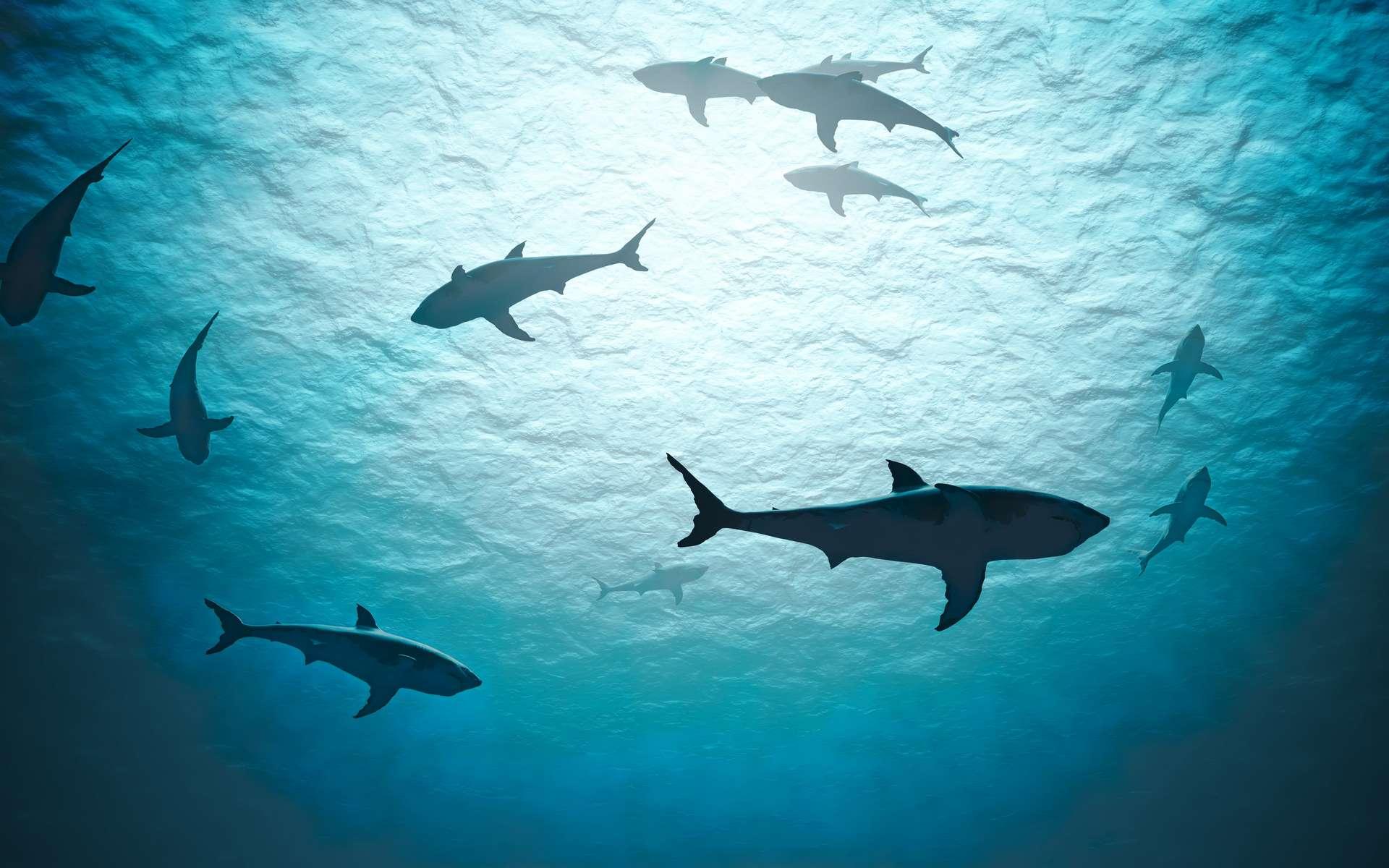 Parmi la mégafaune marine, les requins seraient particulièrement en danger. © Vchalup, Adobe Stock