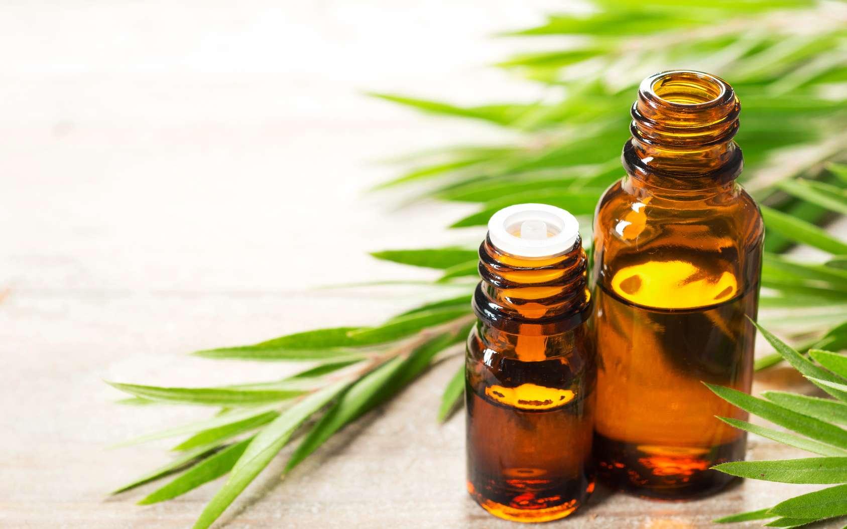 L'huile essentielle de tea tree : quelles sont ses vertus ?