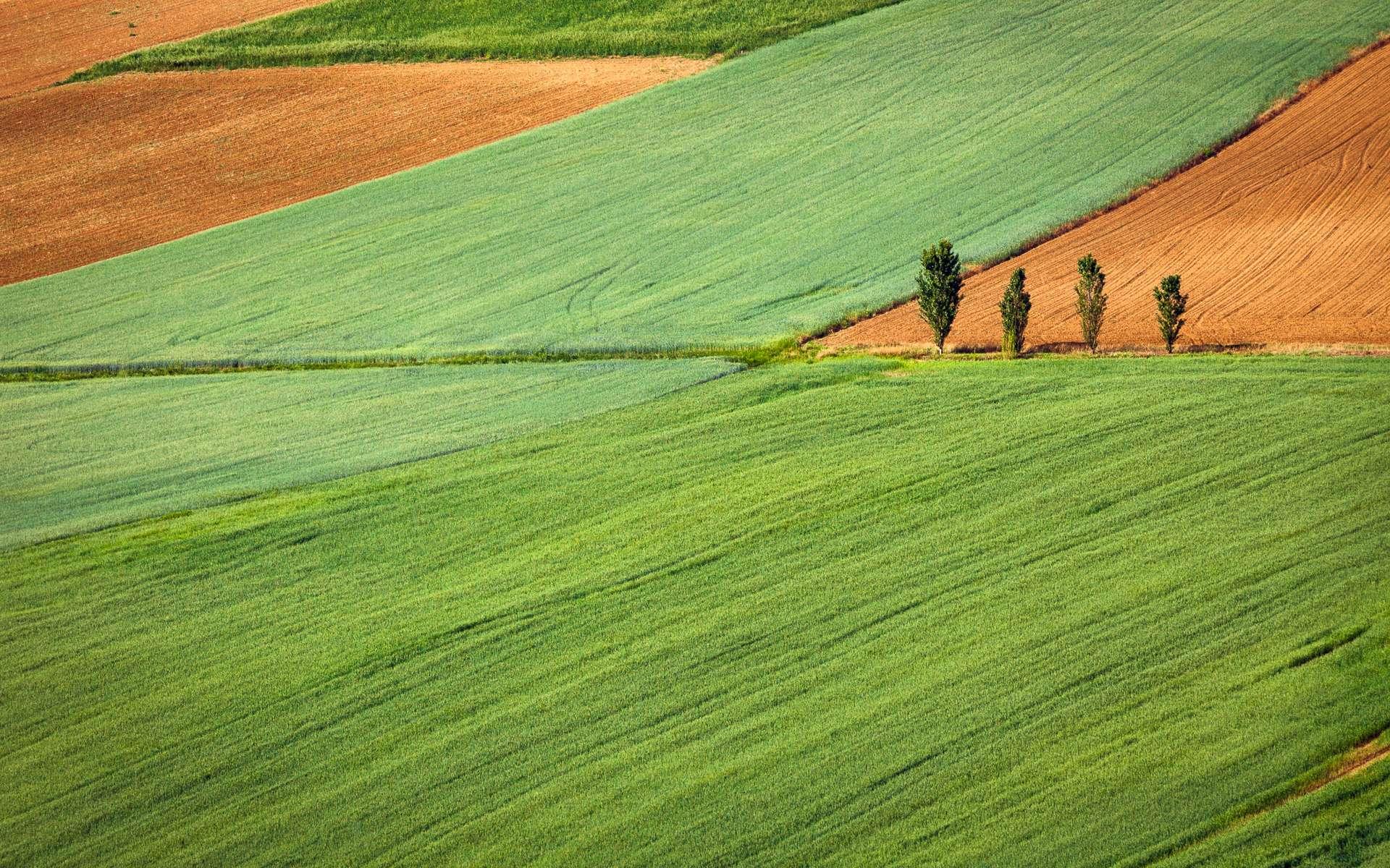 La Terre verdit grâce à la Chine et l'Inde. © Gaetano Cessati, Unsplash