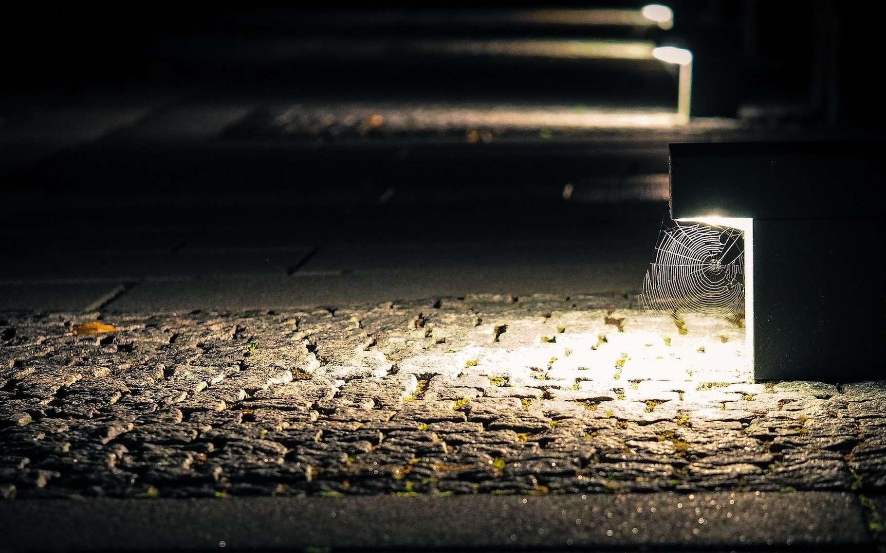 Naturellement, les araignées craignent la lumière. Mais leur exposition à la pollution lumineuse des villes pourrait les avoir fait évoluer. © TBIT, Pixabay, CC0 Creative Commons