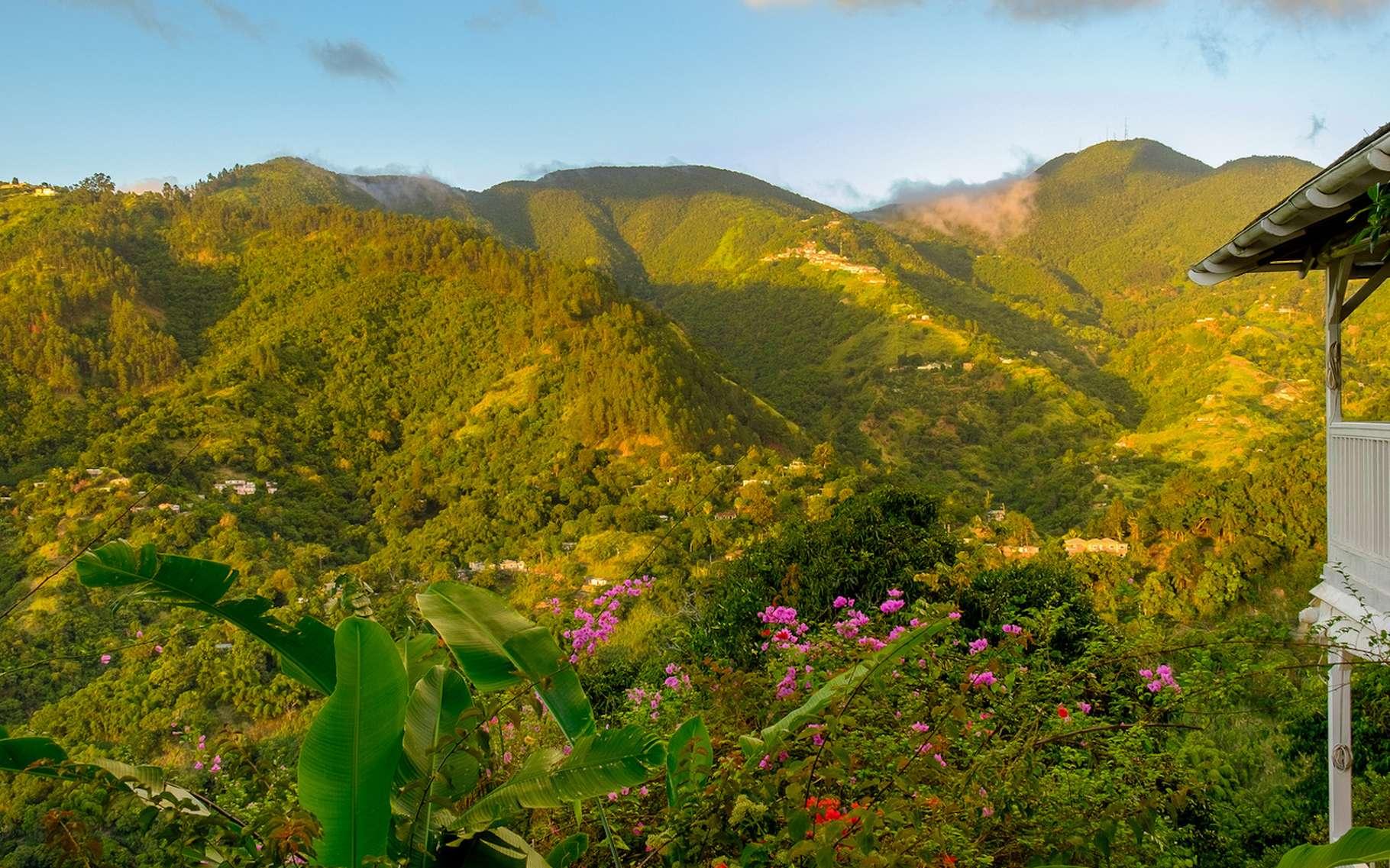 Antoine nous donne un bel aperçu de cette île paradisiaque de la mer des Caraïbe qu'est la Jamaïque. © Eric Laudonien, Fotolia