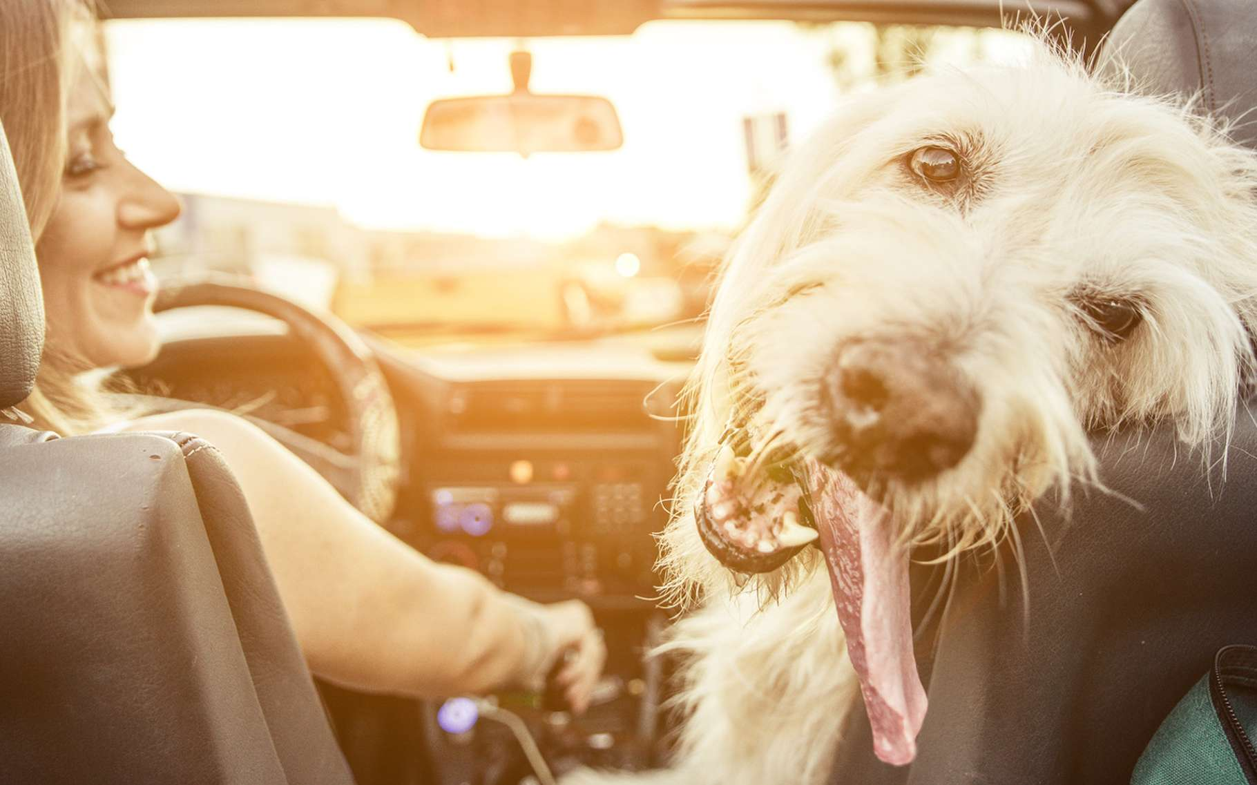 Nos animaux de compagnie aussi peuvent souffrir du mal des transports. Mais il existe des solutions pour les soulager. © oneinchpunch, Fotolia