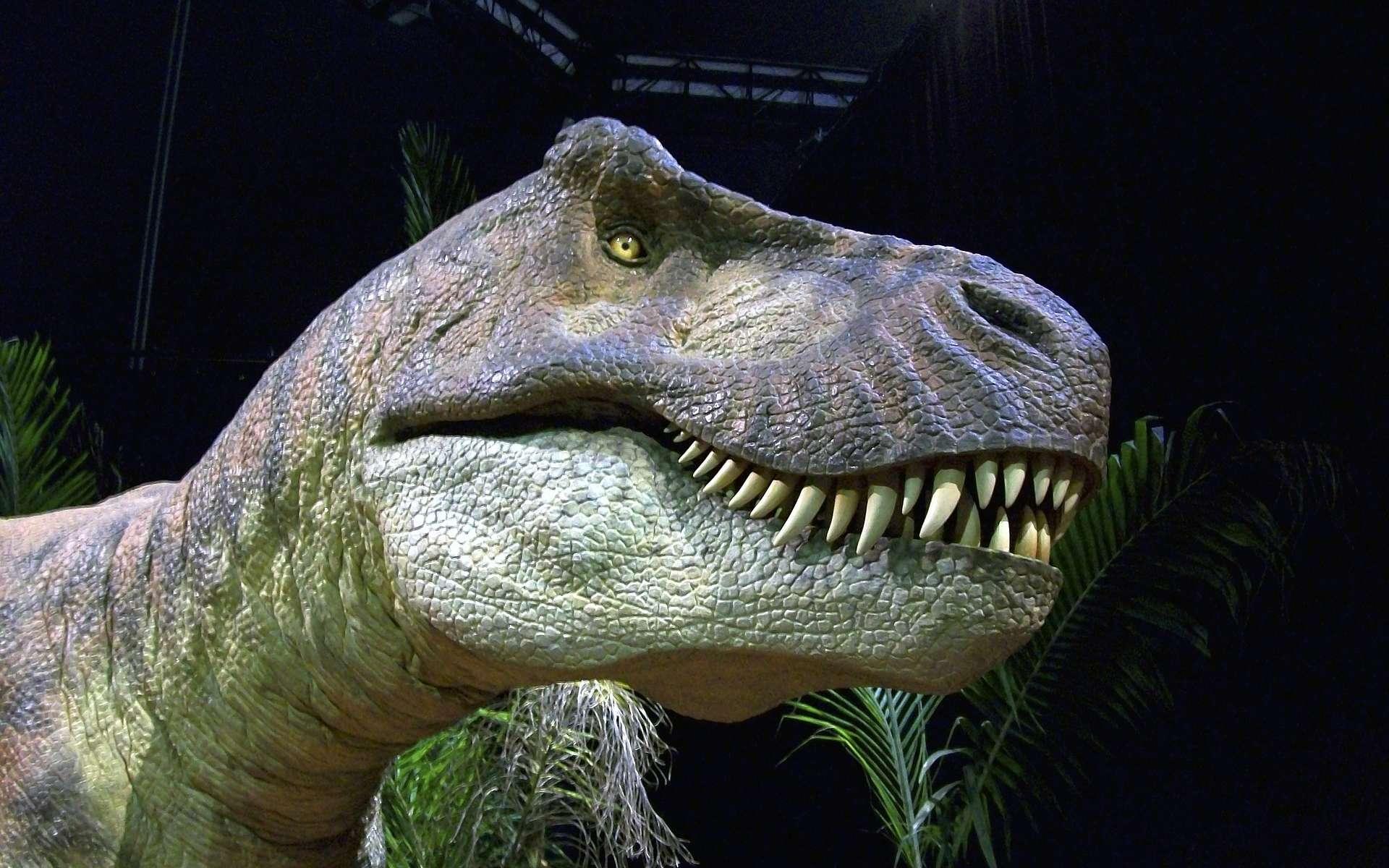 Selon des chercheurs britanniques, et contrairement à ce qui était communément admis, la morphologie du T-Rex ne lui aurait pas permis de courir à plus de 20 km/h. © jim5, Pixabay, DP