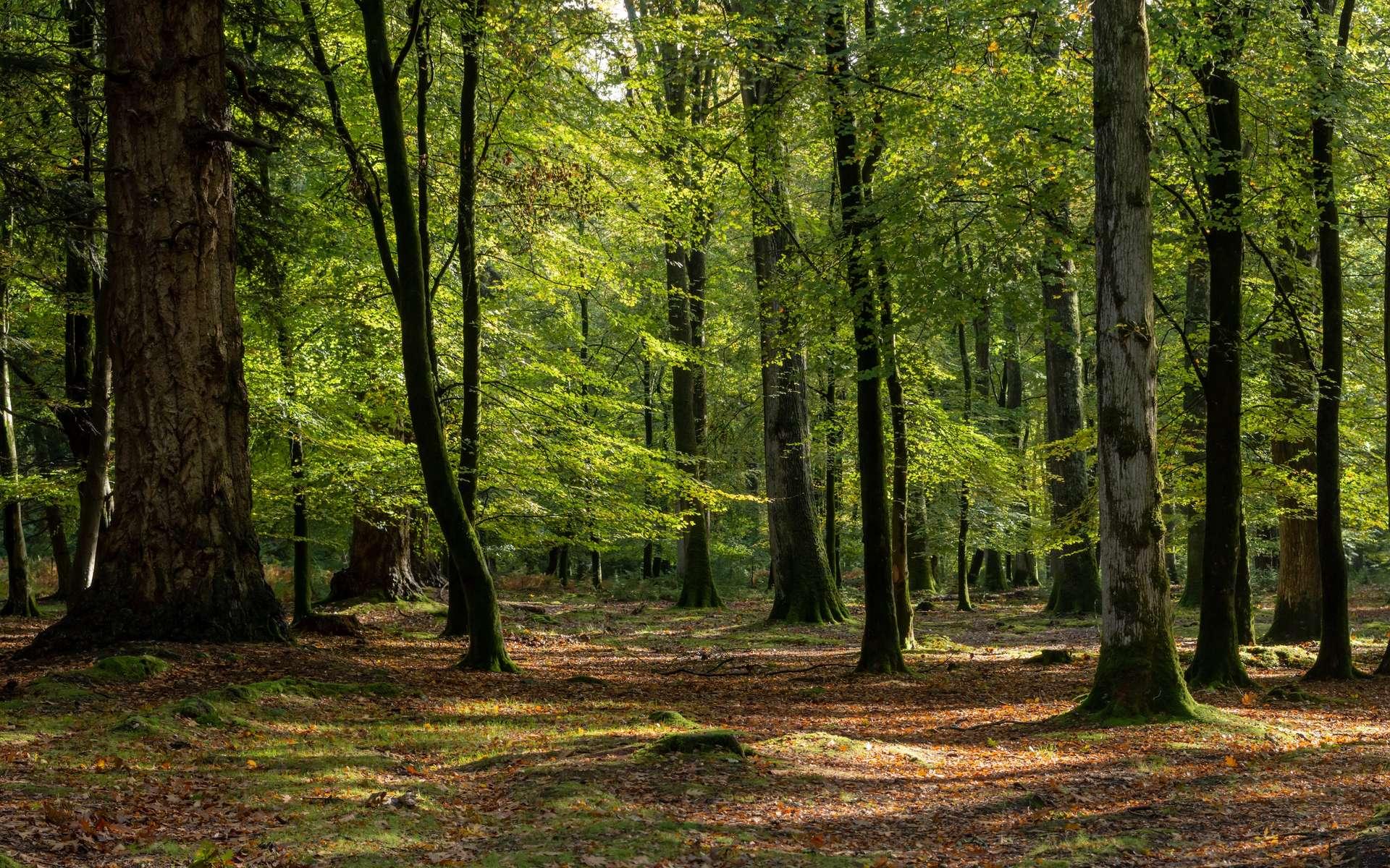 Le réchauffement climatique rend les forêts plus vulnérables. © DRPL, Adobe Stock