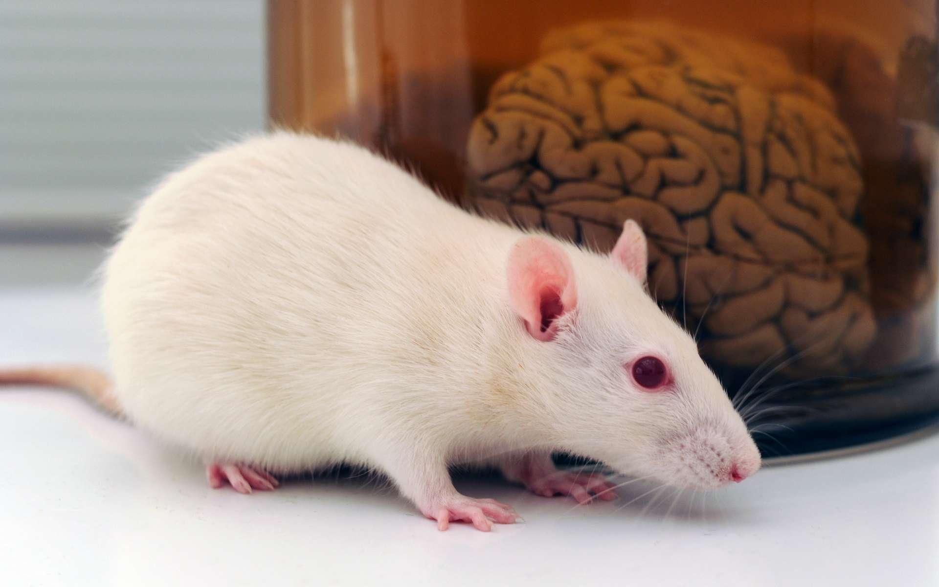 L'huile de soja modifie l'expression d'une centaine de gènes au sein de l'hypothalamus des souris. © polsen, Adobe Stock