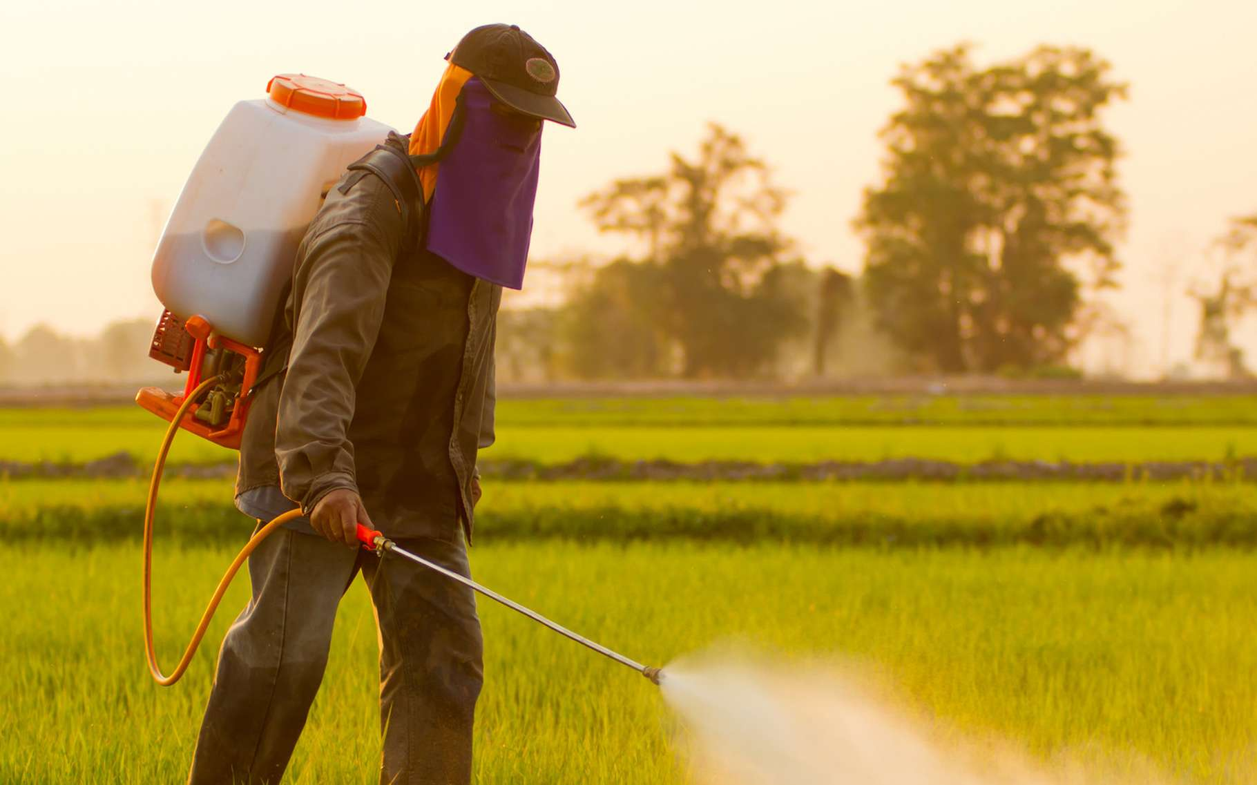 Les agriculteurs sont conscients des dangers des pesticides et préviennent de leur utilisation dans leurs champs. © PiggingFoto, Shutterstock
