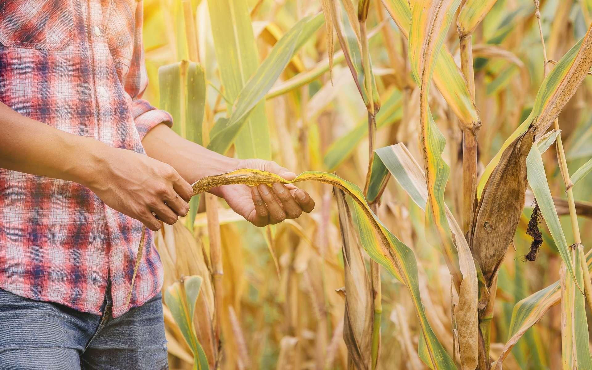 Les agriculteurs devront s'adapter au changement climatique également. © Panumas, Adobe Stock